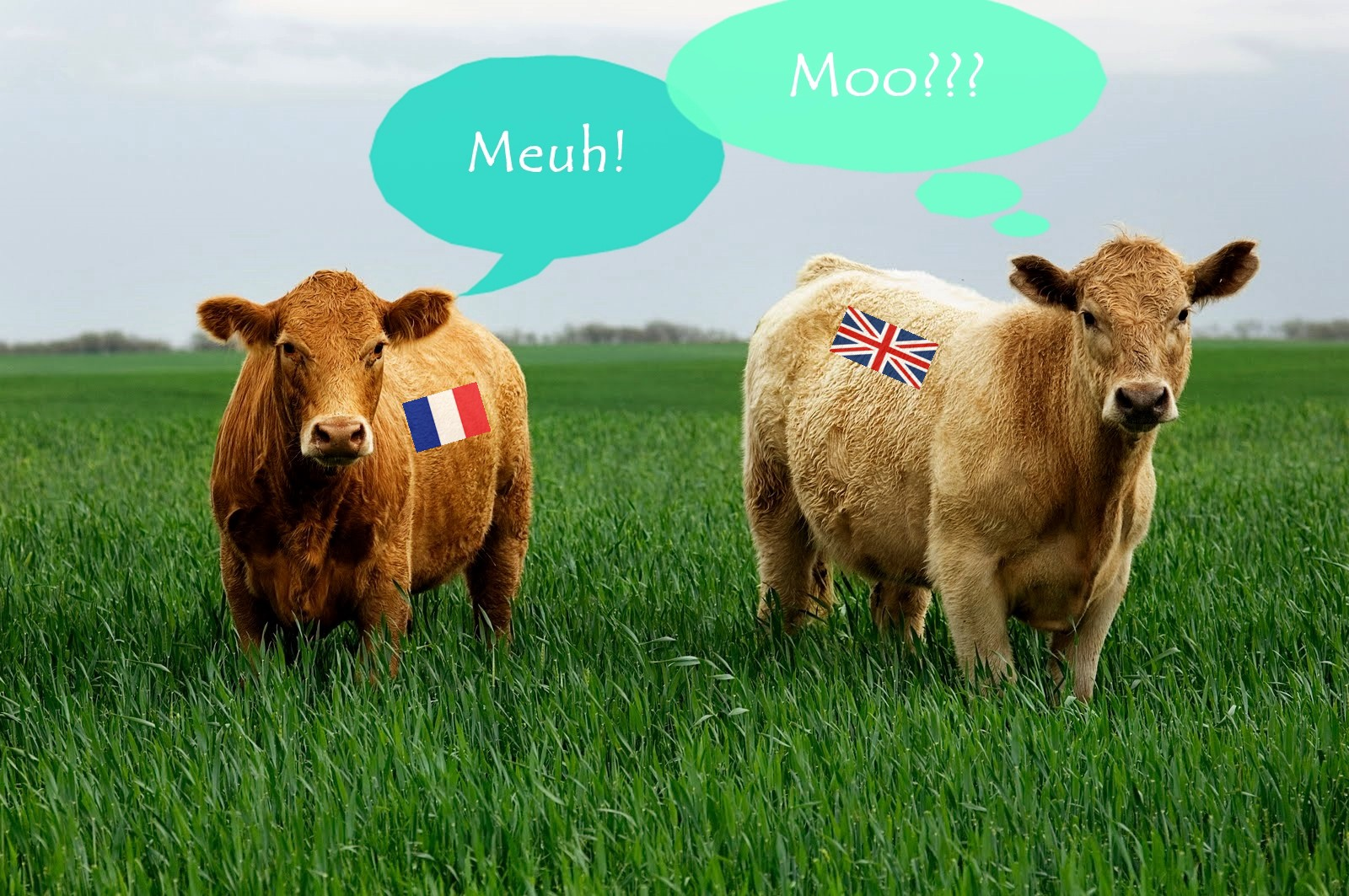 Do Cows go Meuh or Moo? Sound and Meaning in the English