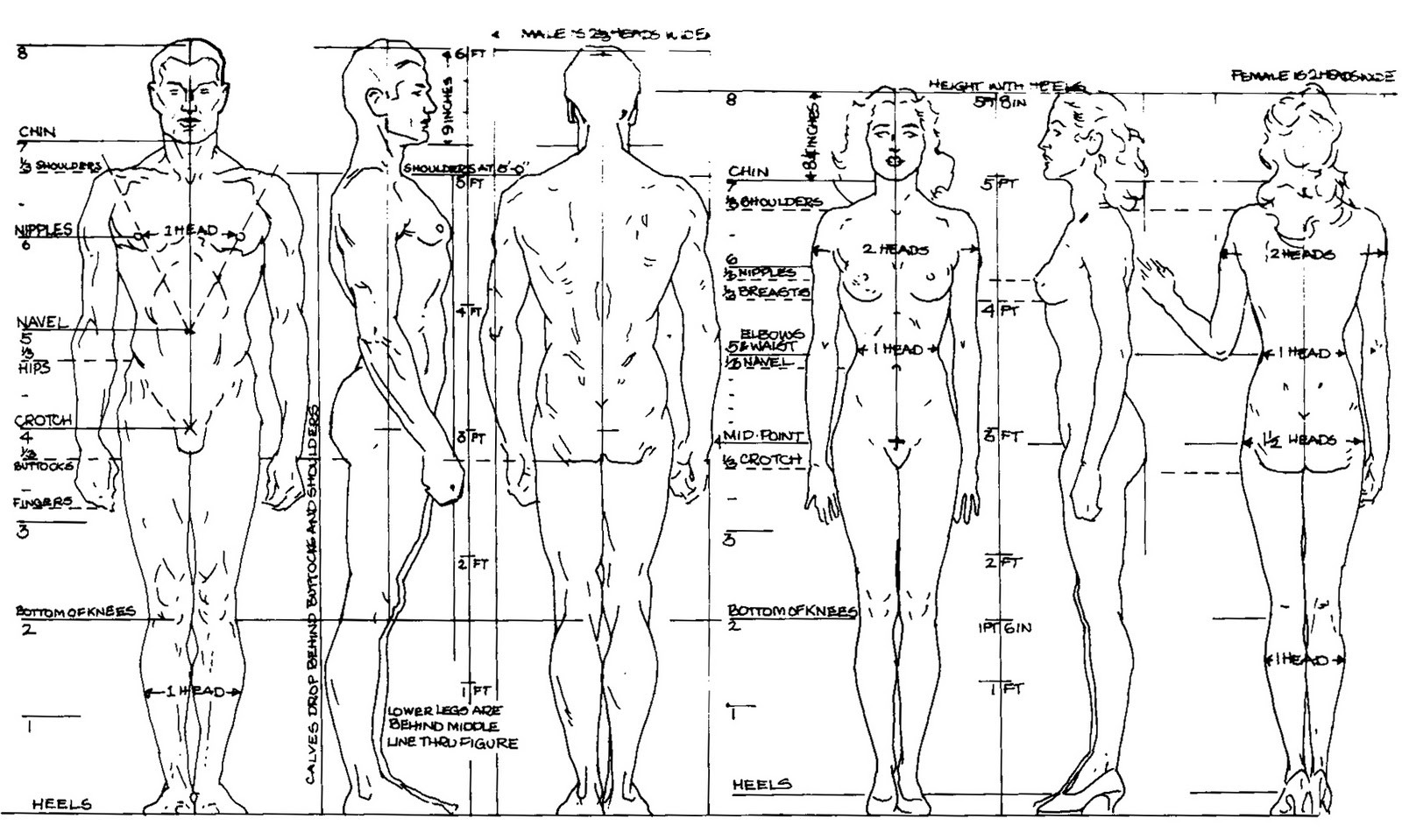 Beginner S Guide Importance Of Proper Body Proportions And How To Get Them Right By Scriba Stylus Medium