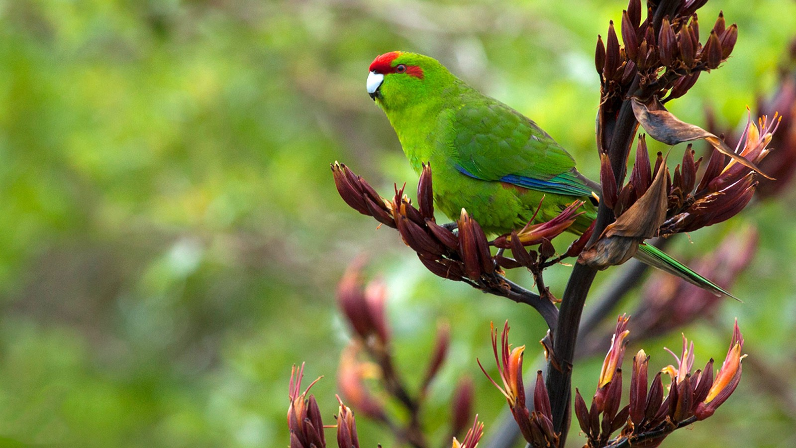 Essential Guide To Choose And Buy A Pet Parrot By Parrot Bird Medium