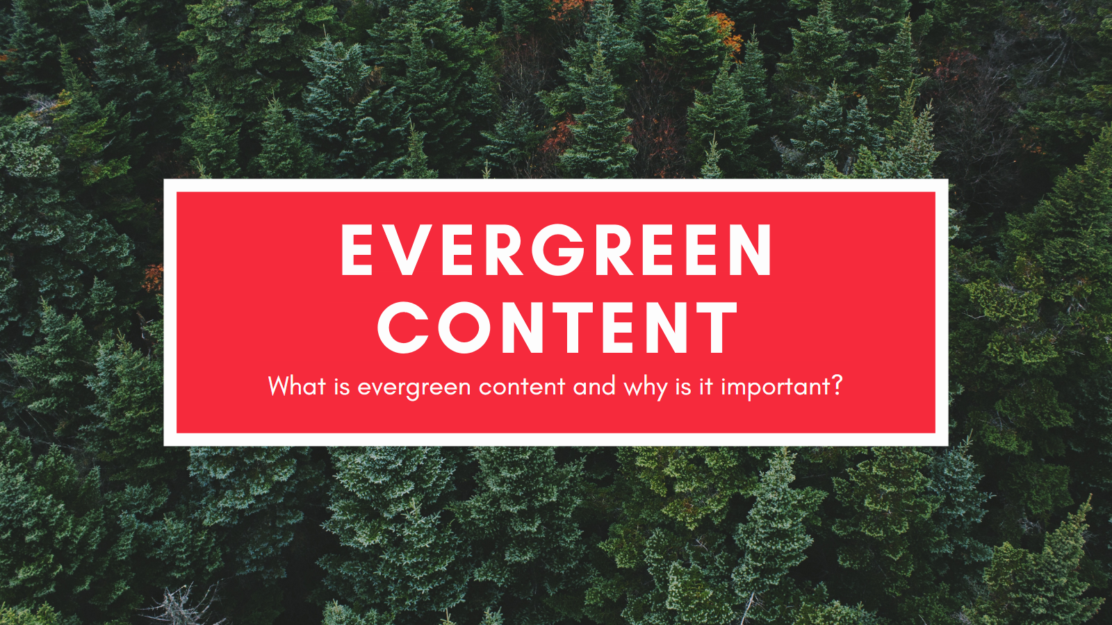 evergreen content, how to find evergreen content, importance of evergreen content, how to create evergreen content, evergreen