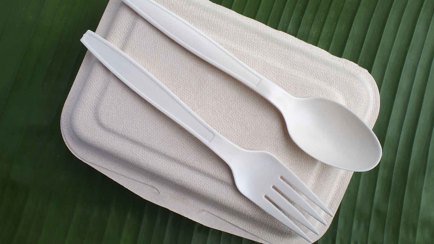 Bioplastic food containers against a green background