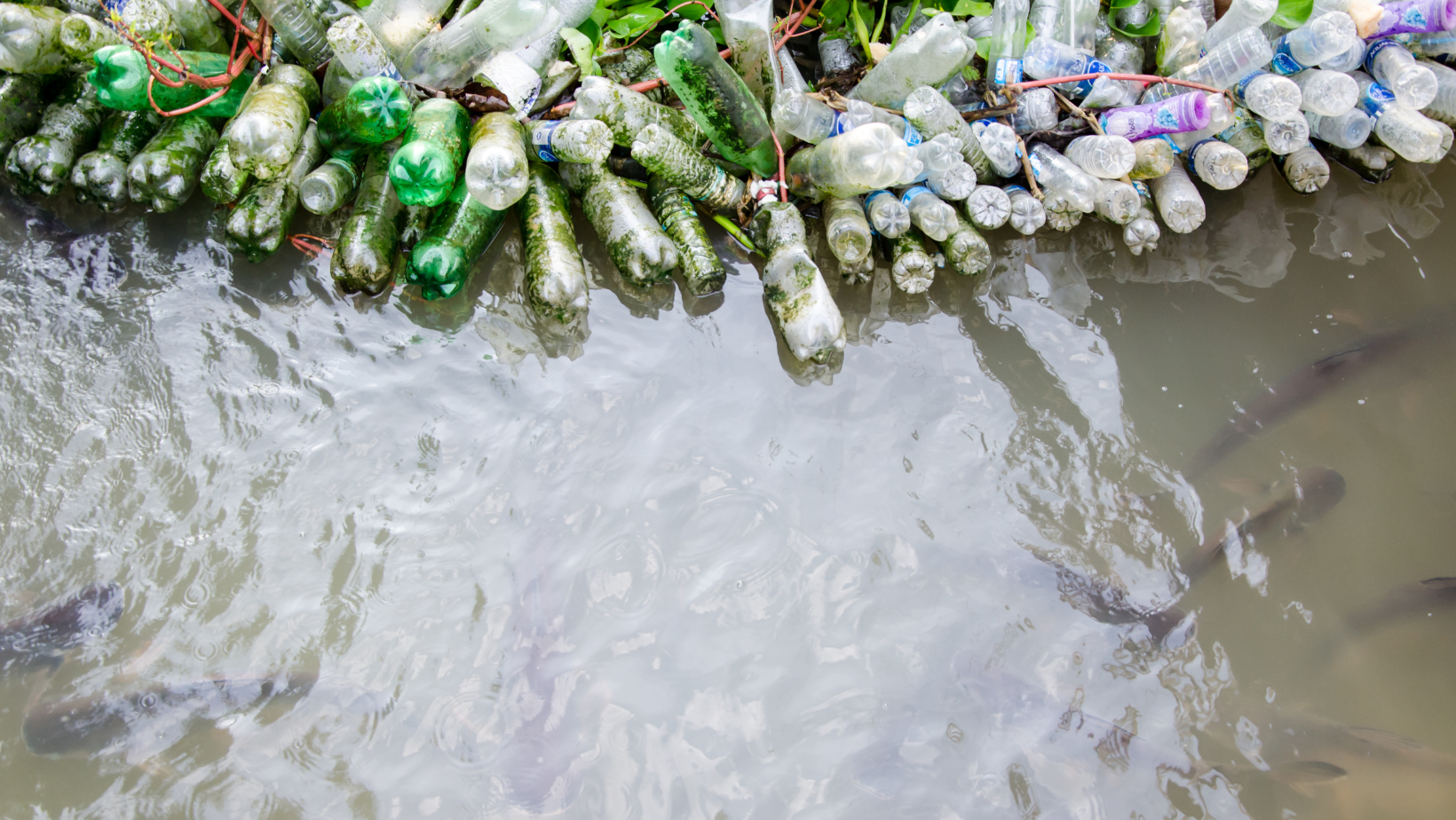 A bunch a plastic bottles in murky water with fish swimming around
