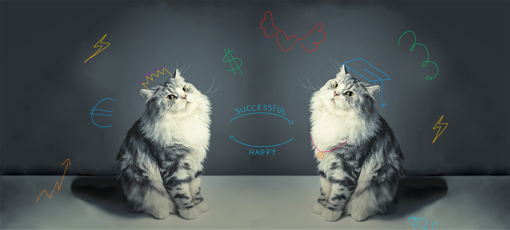 🐈 How to achieve success in life