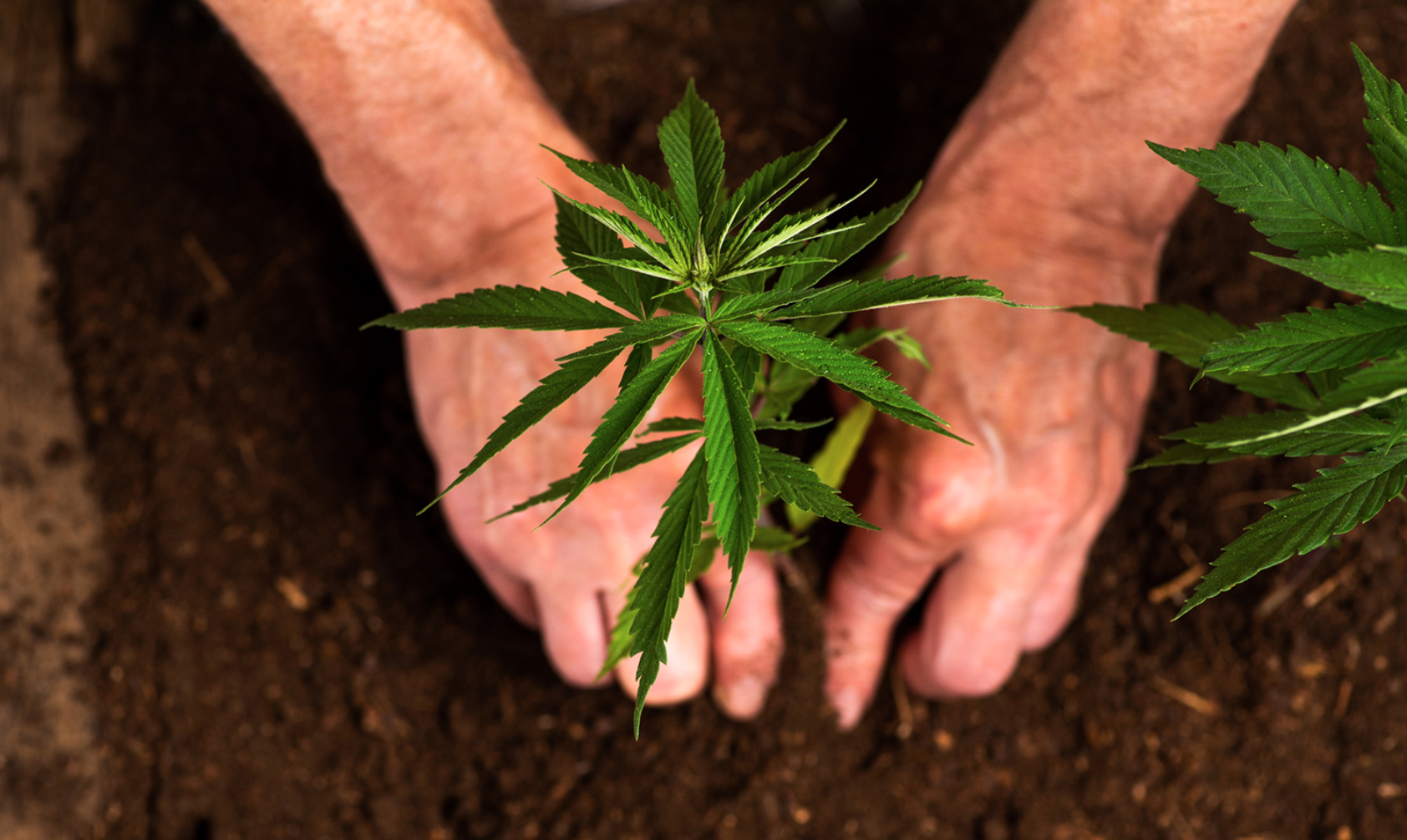 The History Of Hemp Farming In The United States By Grow With Redeem Medium