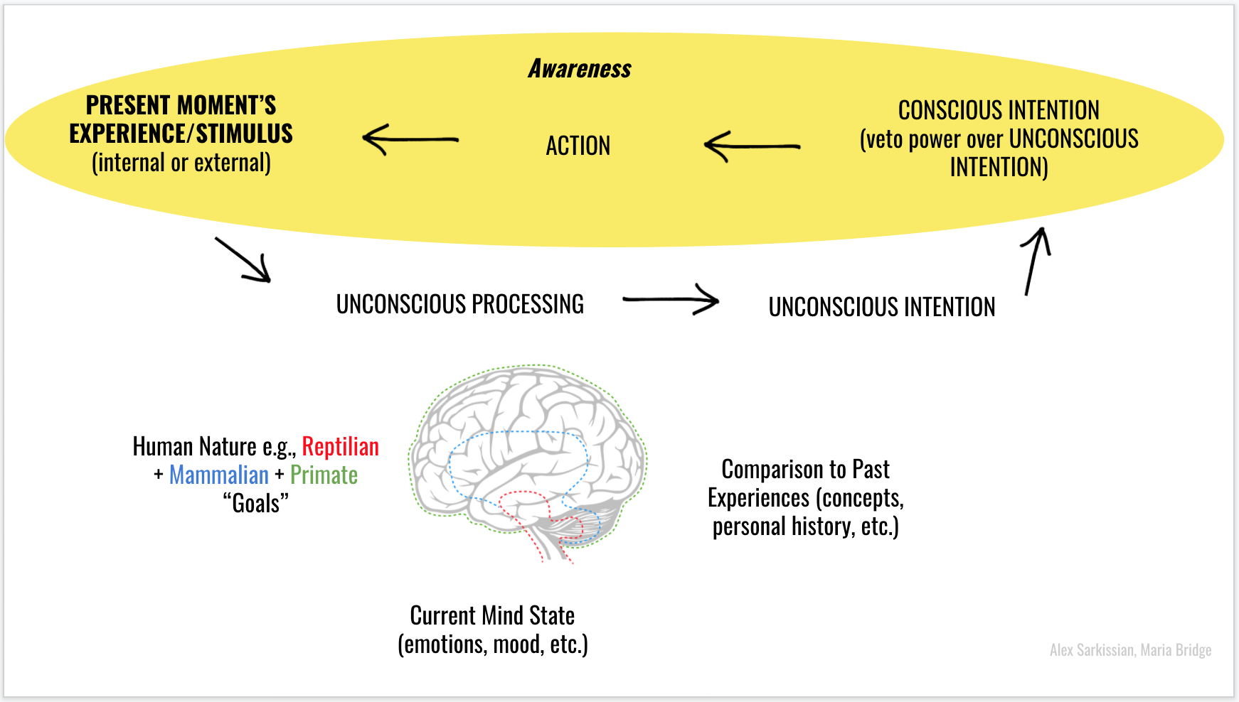 A flow chart diagram, showing how awareness helps us to have veto power over unconscious intentions.