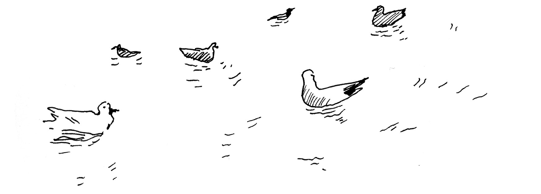 A drawing of a group of seagulls bobbing on the water