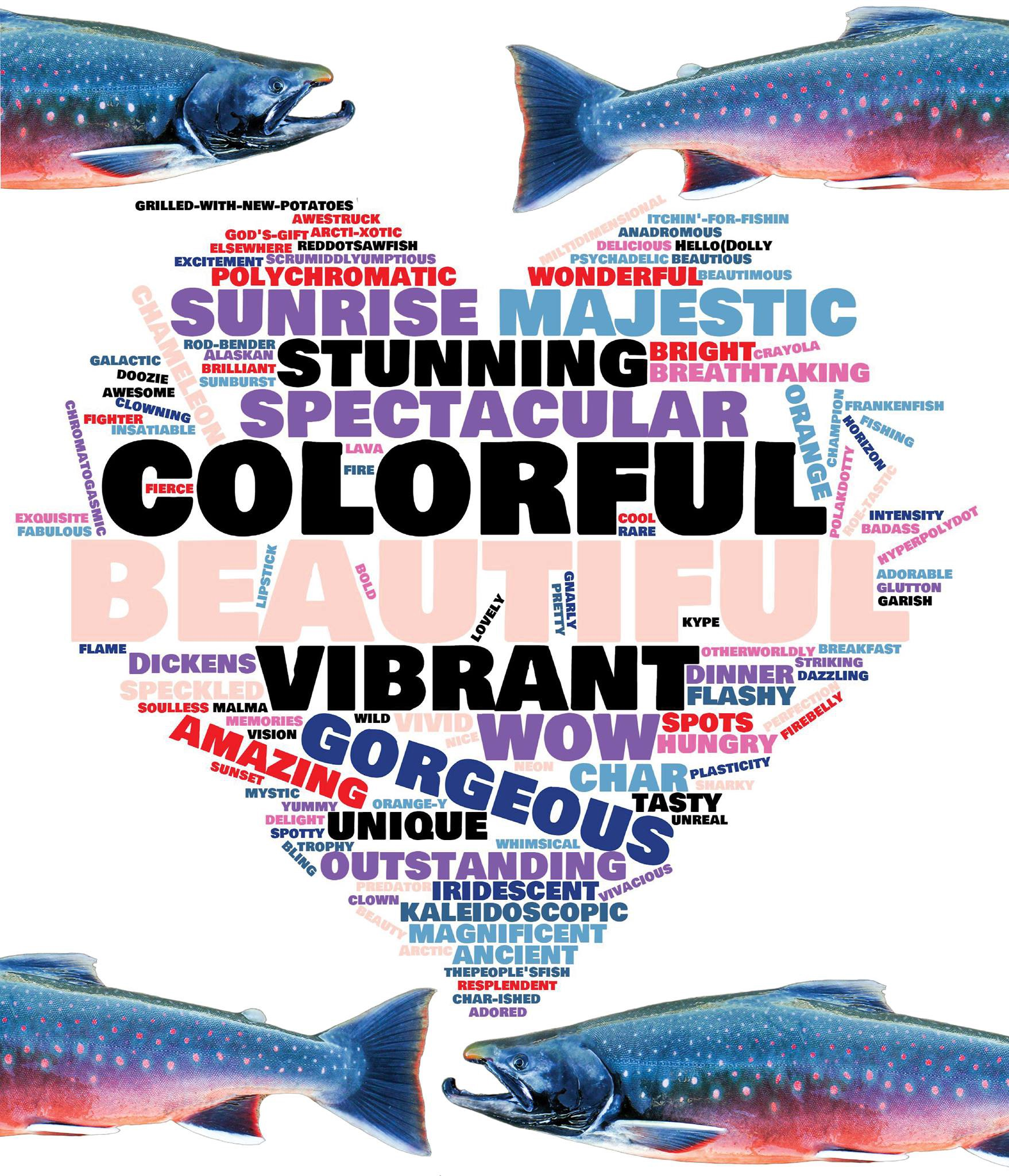 word cloud Dolly Varden facebook comments with colorful dollies
