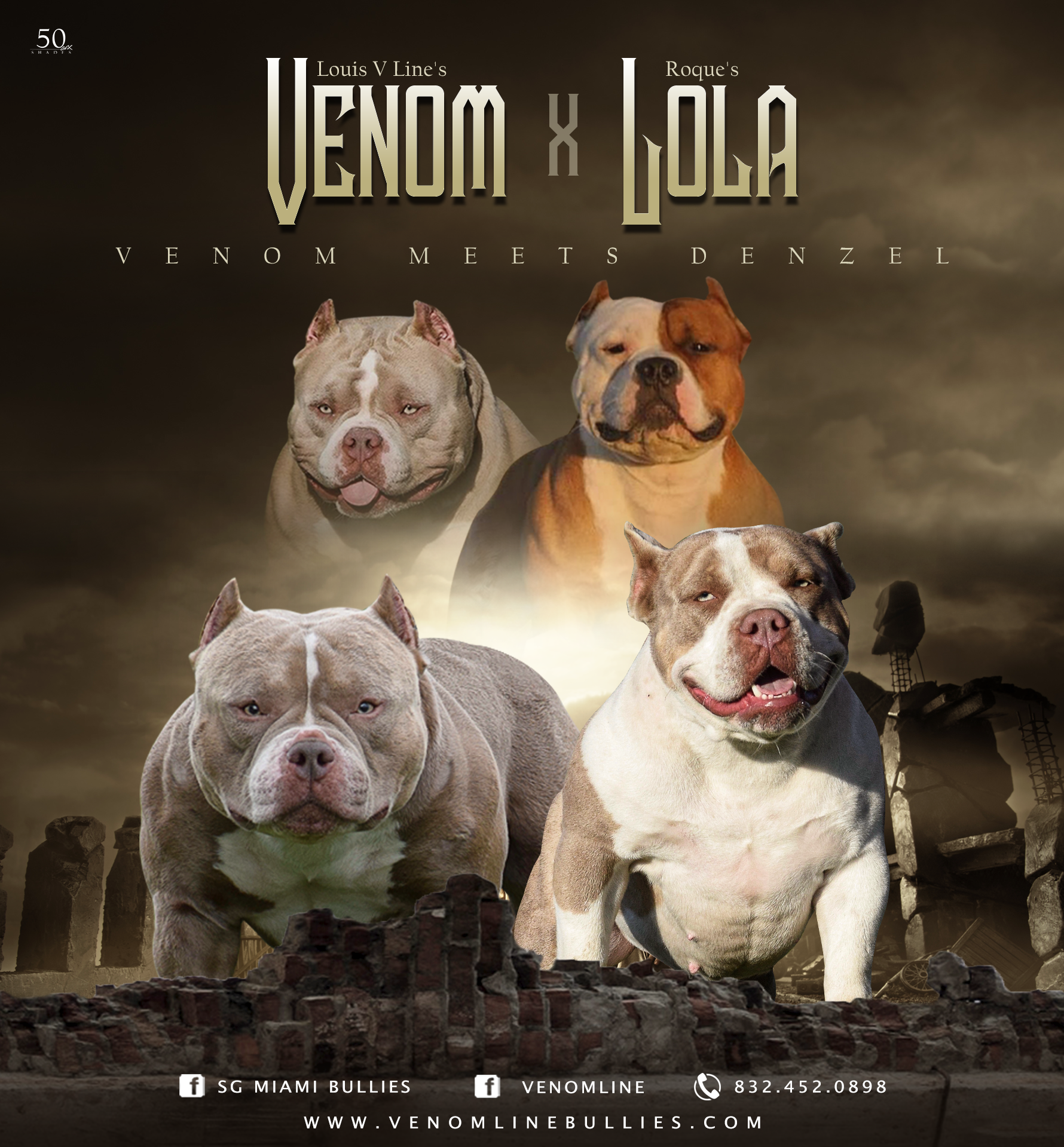 Lilac Champagne Pocket American Bully Puppies Available