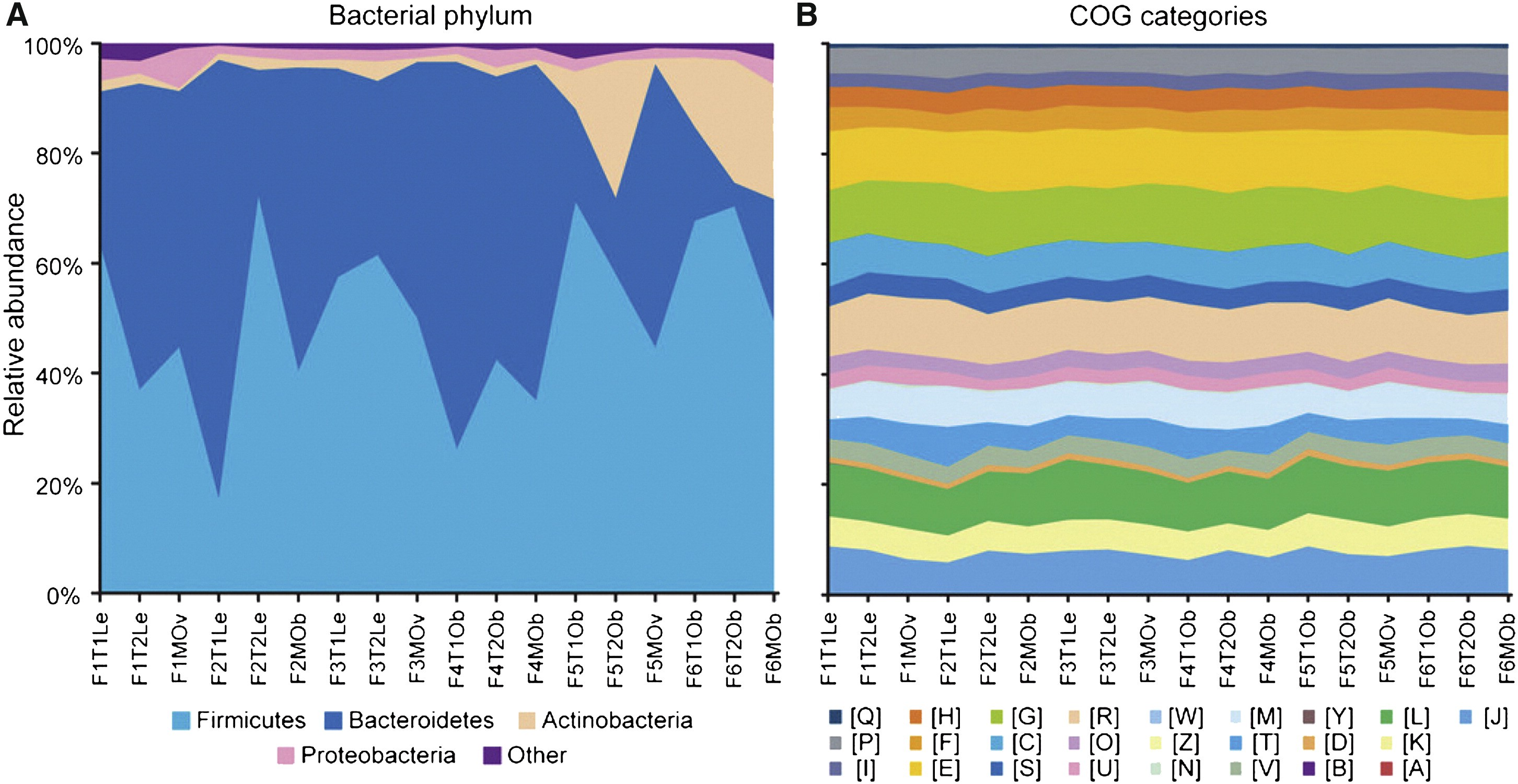 Disparity Between Microbial Community Composition and Function among Individuals