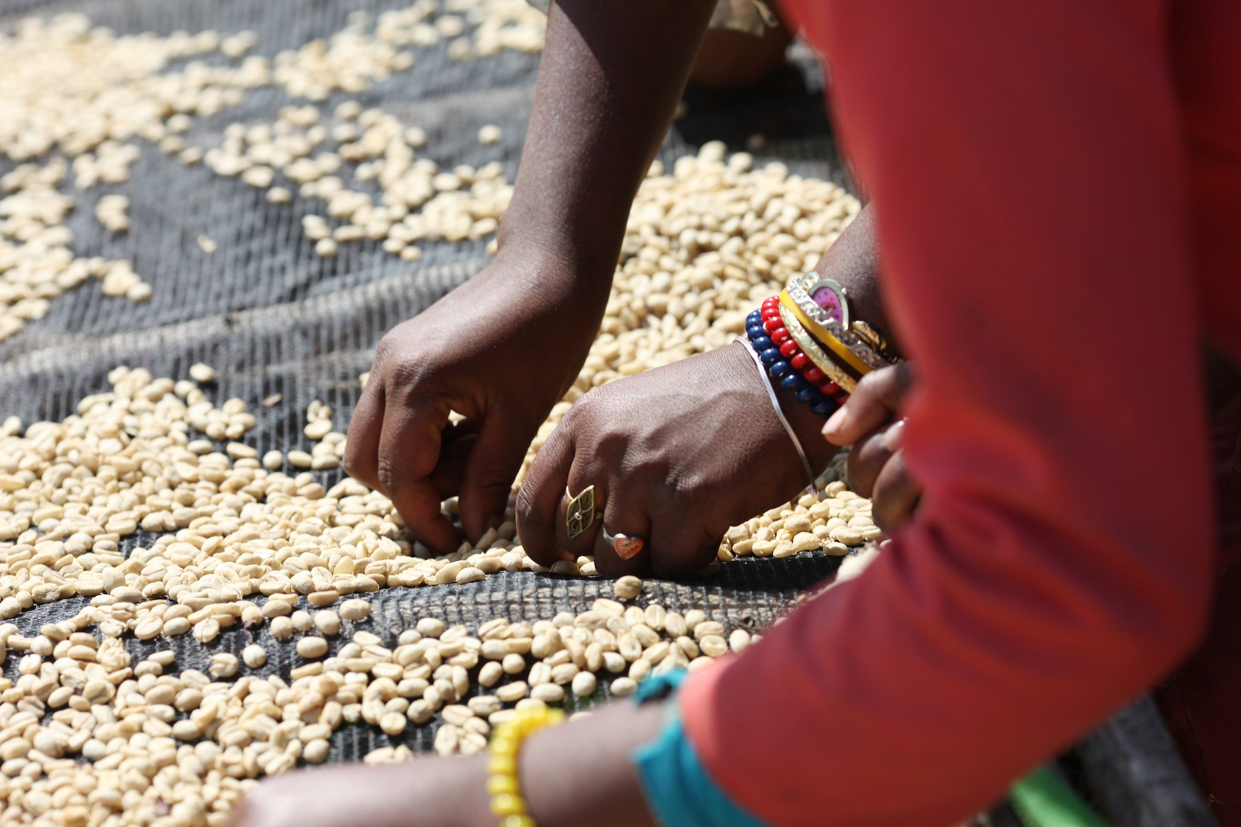 Coffee Notes: Meet Our Ethiopia Limu | by Genuine Origin | Medium
