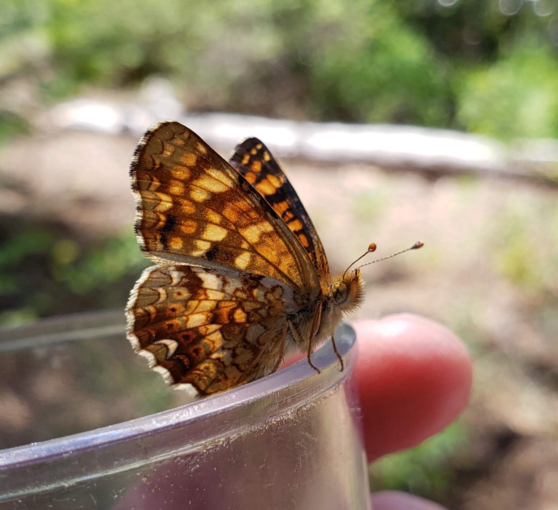 black and orange butterfly on edge of open jar