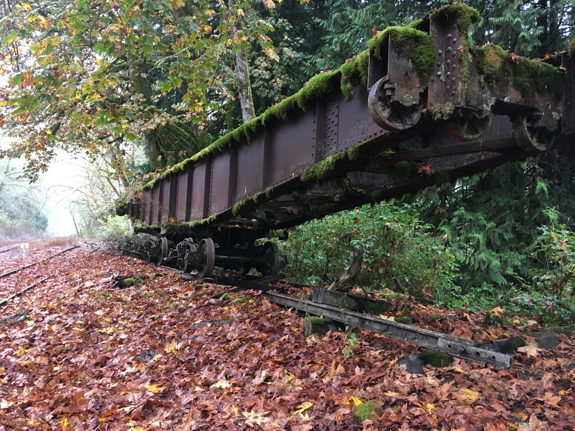 A railroad turntable sitting upon two sets of wheels on tracks in the forest