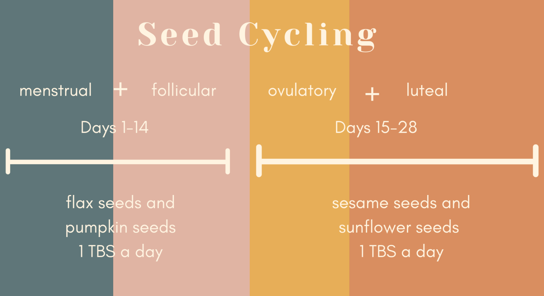 Graphic showing seed cycling and the phases