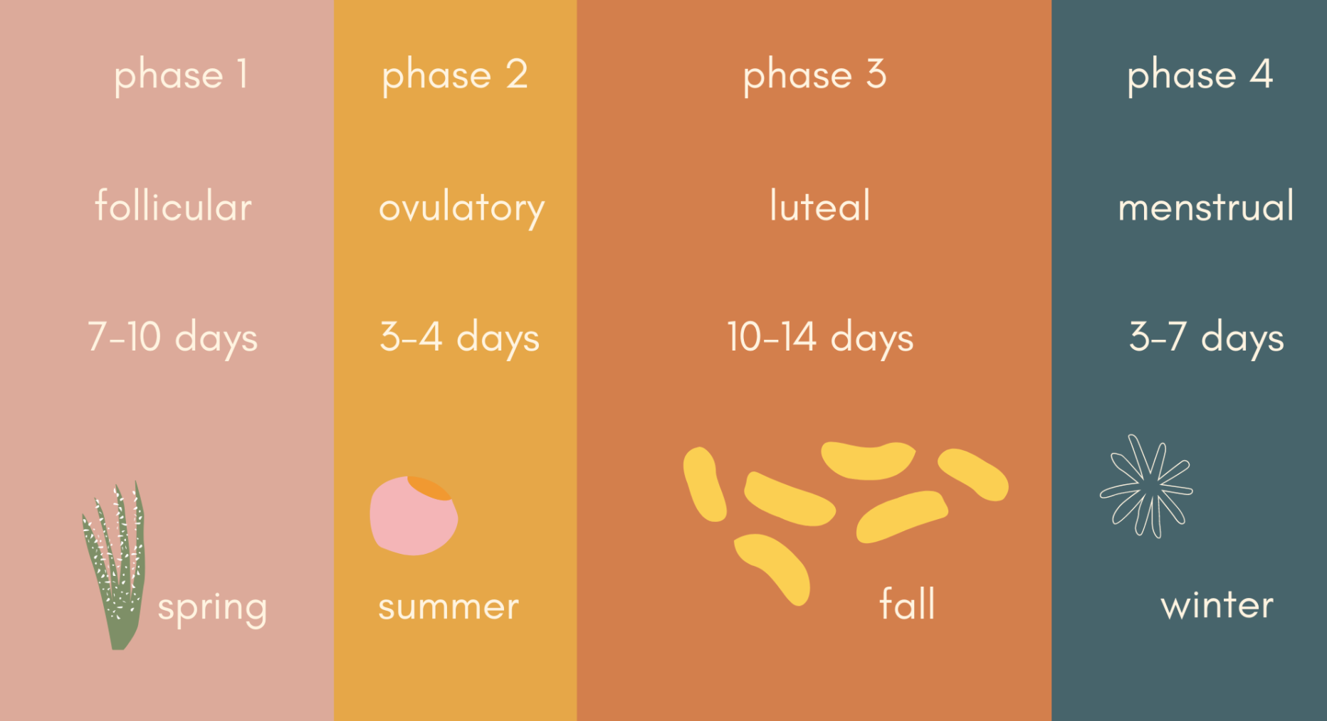 Graphic showing the four phases