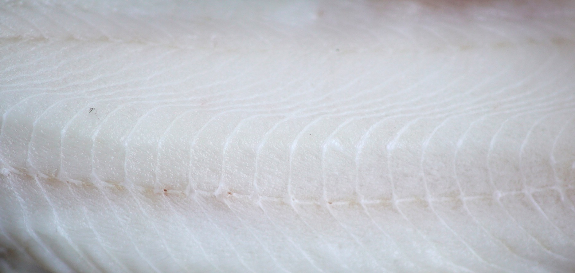 close-up of a sablefish fillet