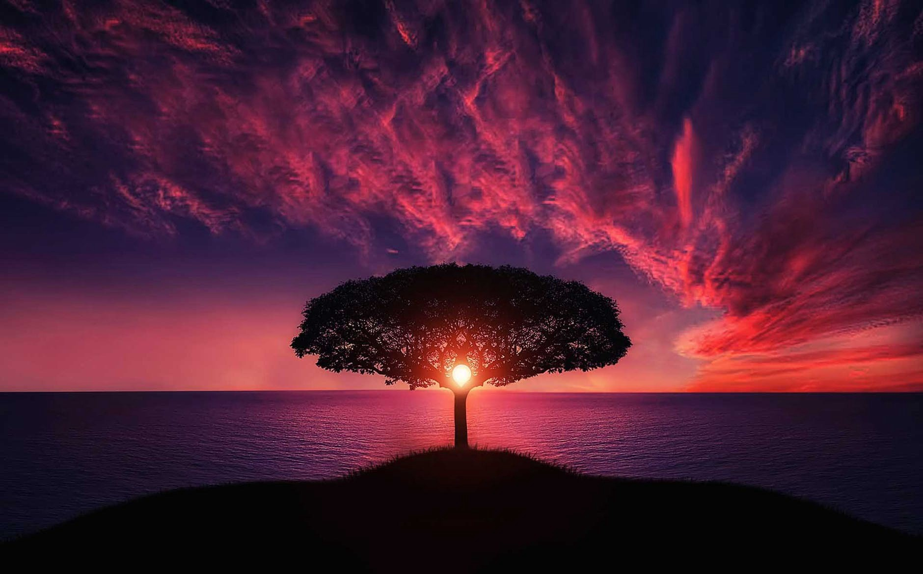 Beautiful sunset seen through a lone tree over the sea