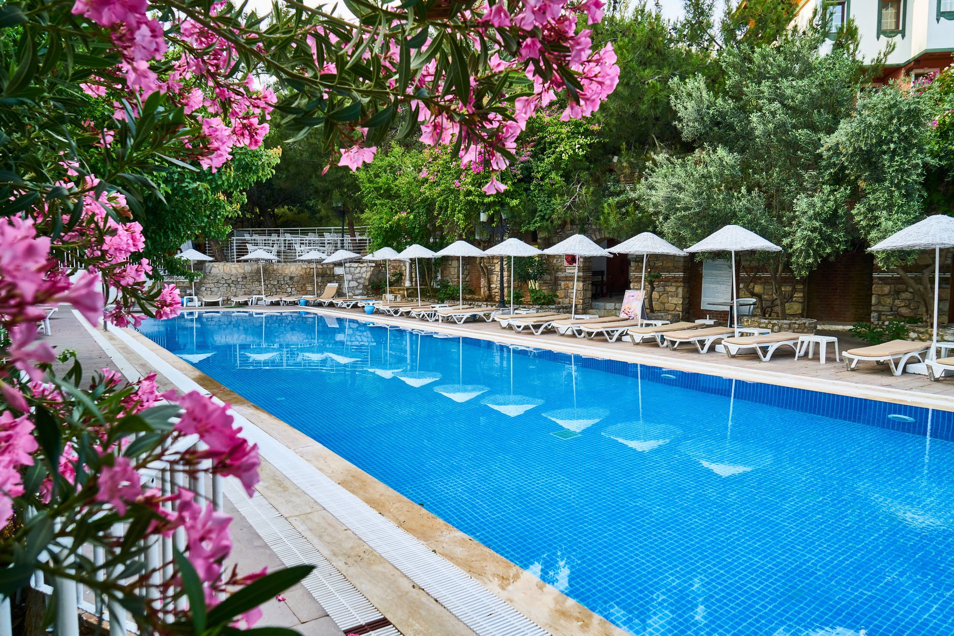 Tropical Plants For Your Pool Area Paradise Awaits