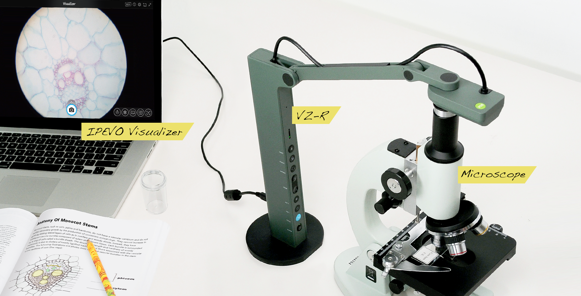 Get a closer look by using IPEVO's document cameras with a microscope