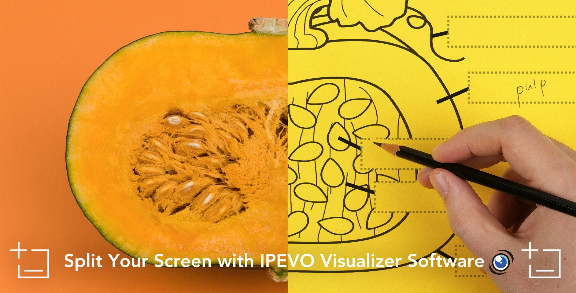 Split Your Screen with IPEVO Visualizer Software