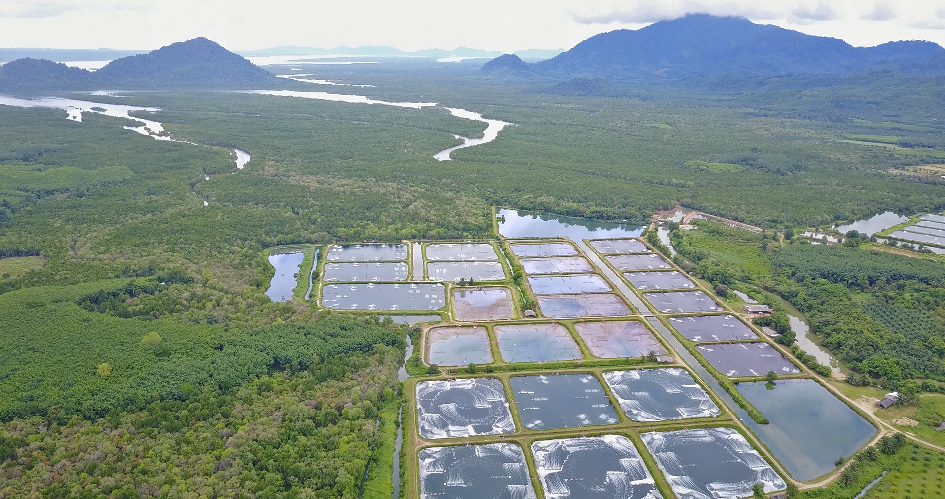 4 Best Countries to Get Your Farmed Shrimp - Sustainable