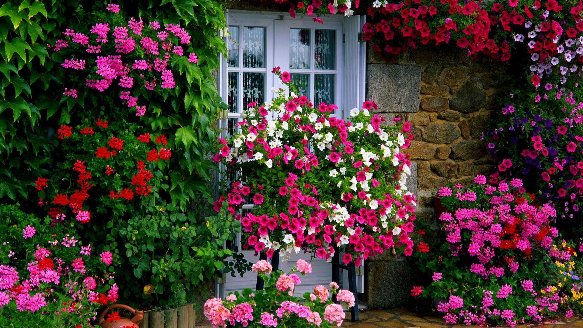 10 Best Low-Maintenance Flowers for Effortless Garden Ideas Colorful Planters For Backyard on backyard urn ideas, backyard patio ideas, cheap retaining wall ideas, backyard rose ideas, diy flower garden design ideas, backyard fence ideas, backyard gift ideas, tropical landscape patio design ideas, backyard outdoor ideas, backyard wood ideas, backyard landscaping ideas, back yard landscaping design ideas, backyard shelf ideas, small backyard ideas, outdoor flower pot decorating ideas, backyard plant ideas, backyard statue ideas, backyard bed ideas, backyard light ideas, backyard flowers ideas,