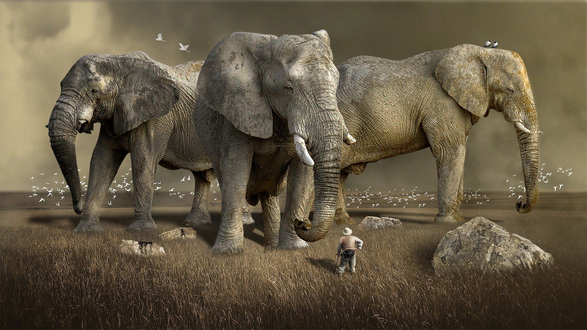 A small man in a field facing three giant elephants serving as symbols of a dream.