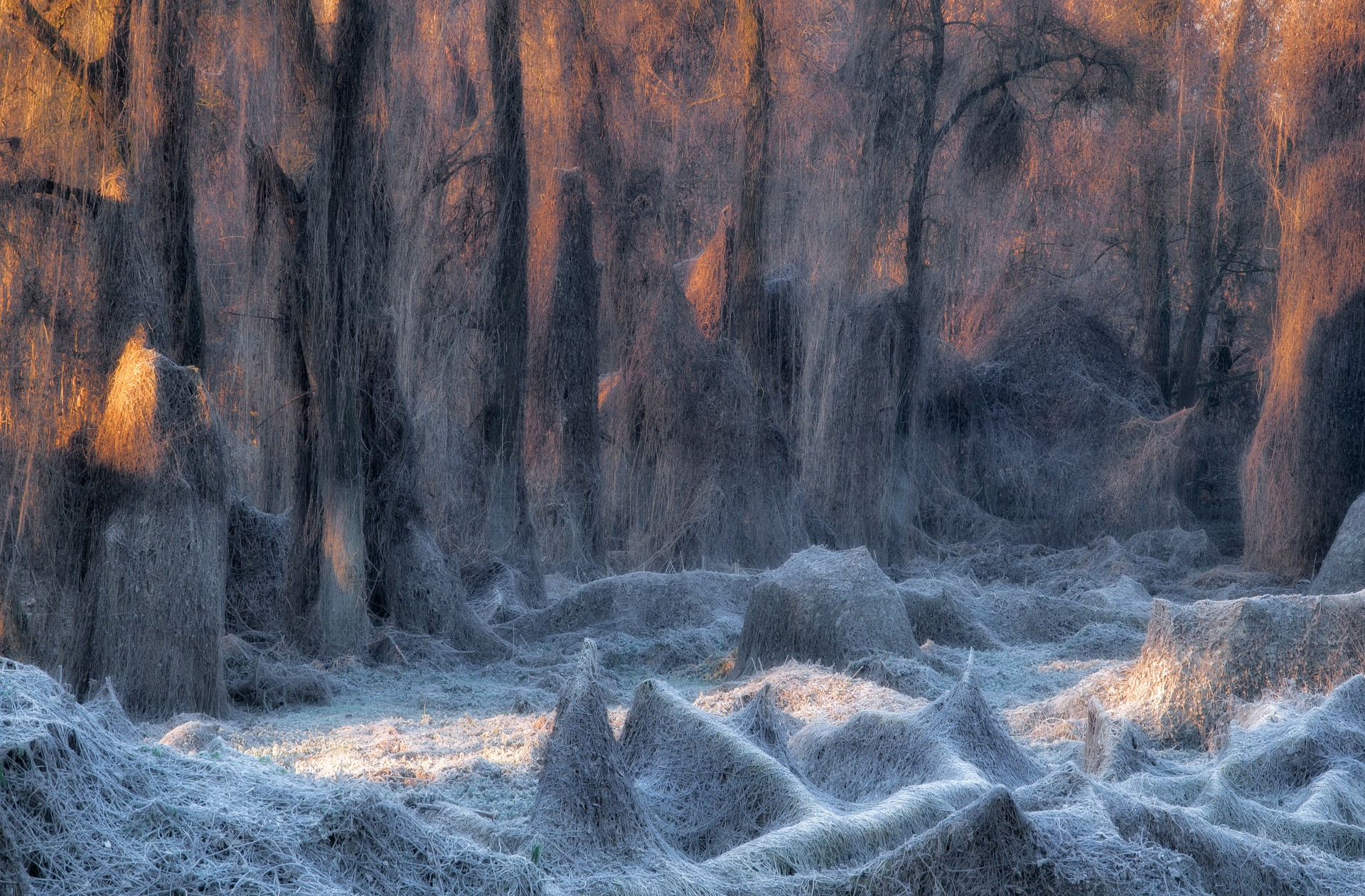 A forest looks magical due to the frost.