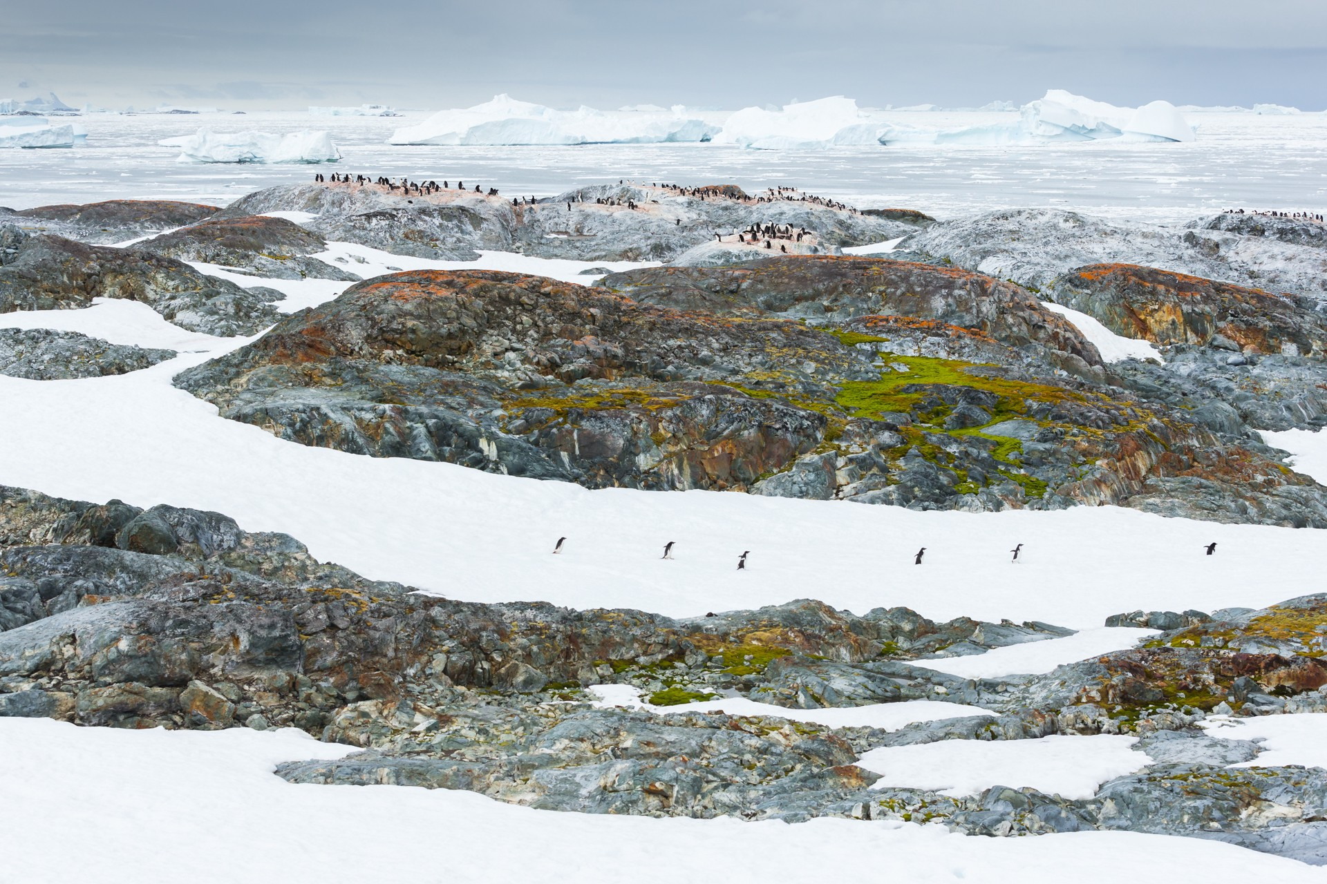 Penguins march in the Antarctic circle.