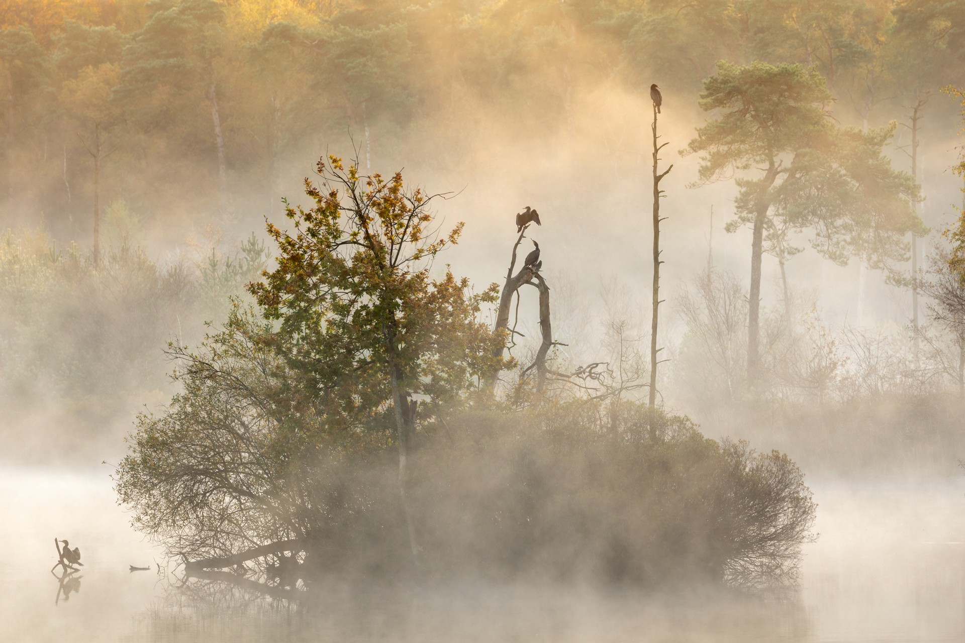 Animals at dawn in the forest.