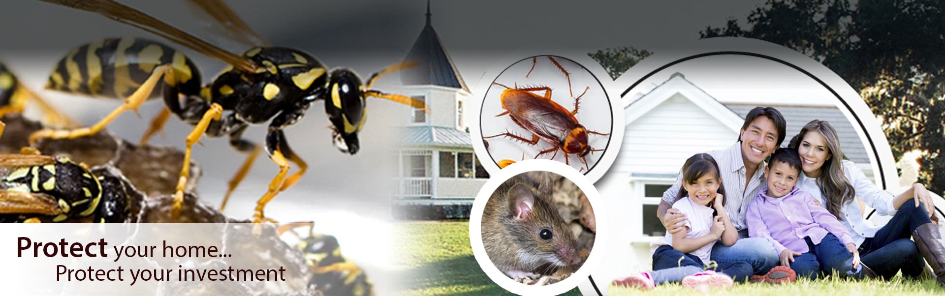 Which Treatment Is Best For Termite Control In Delhi Ncr Home Vs Expert By Quality Highcare Medium