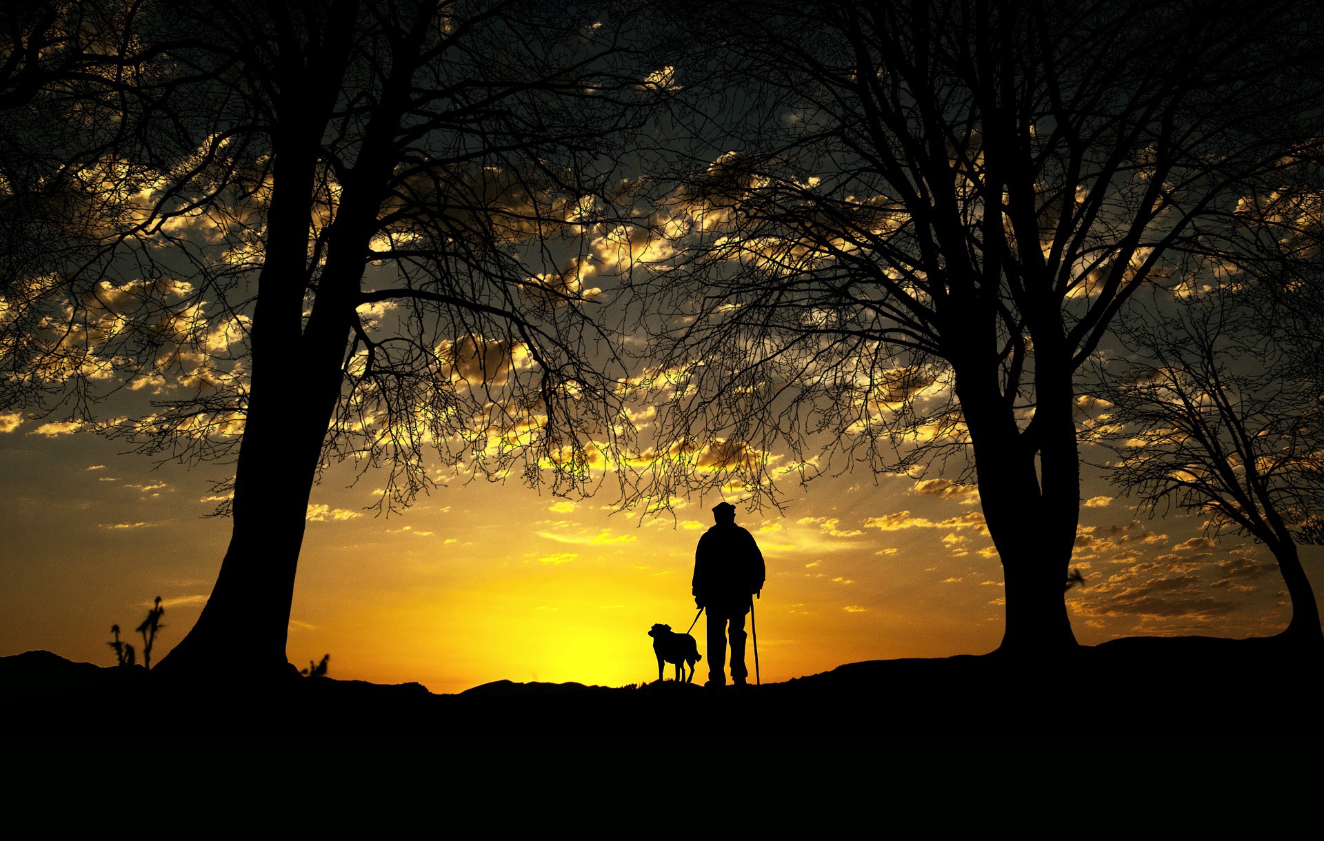 A man and dog enjoy the beauty of nature in the evening woodland sunset.
