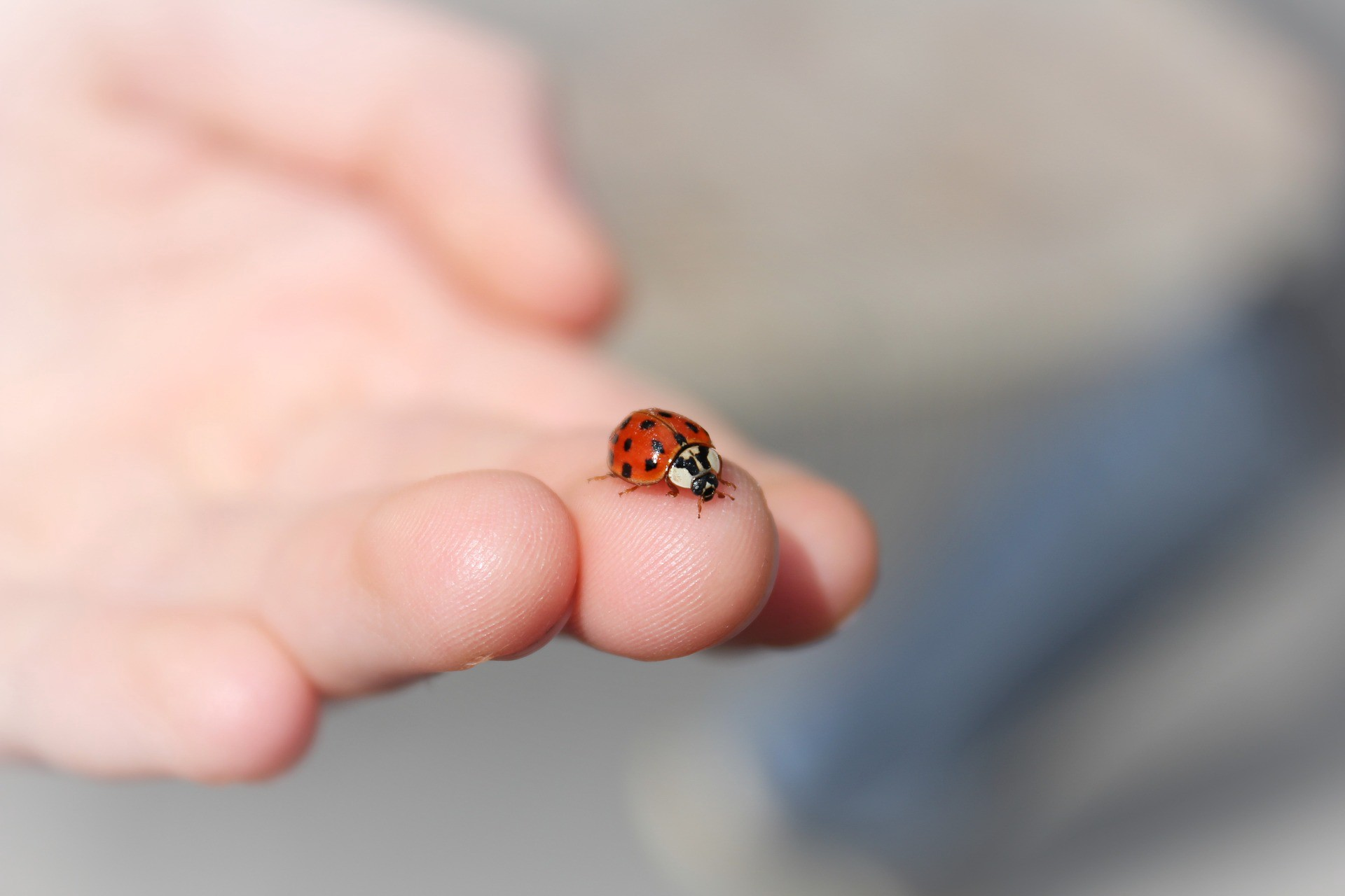 An outstretched hand with a ladybird on the tip of the middle finger.