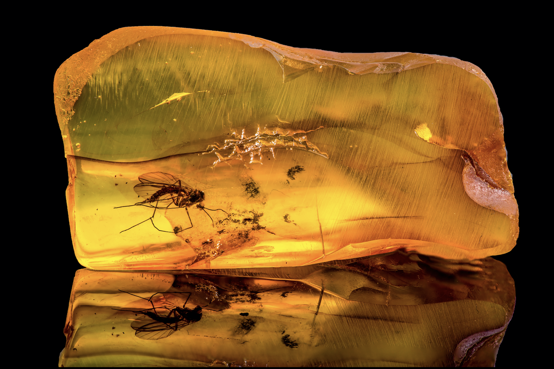 Mosquito trapped in amber, a reference to the movie Jurassic Park.