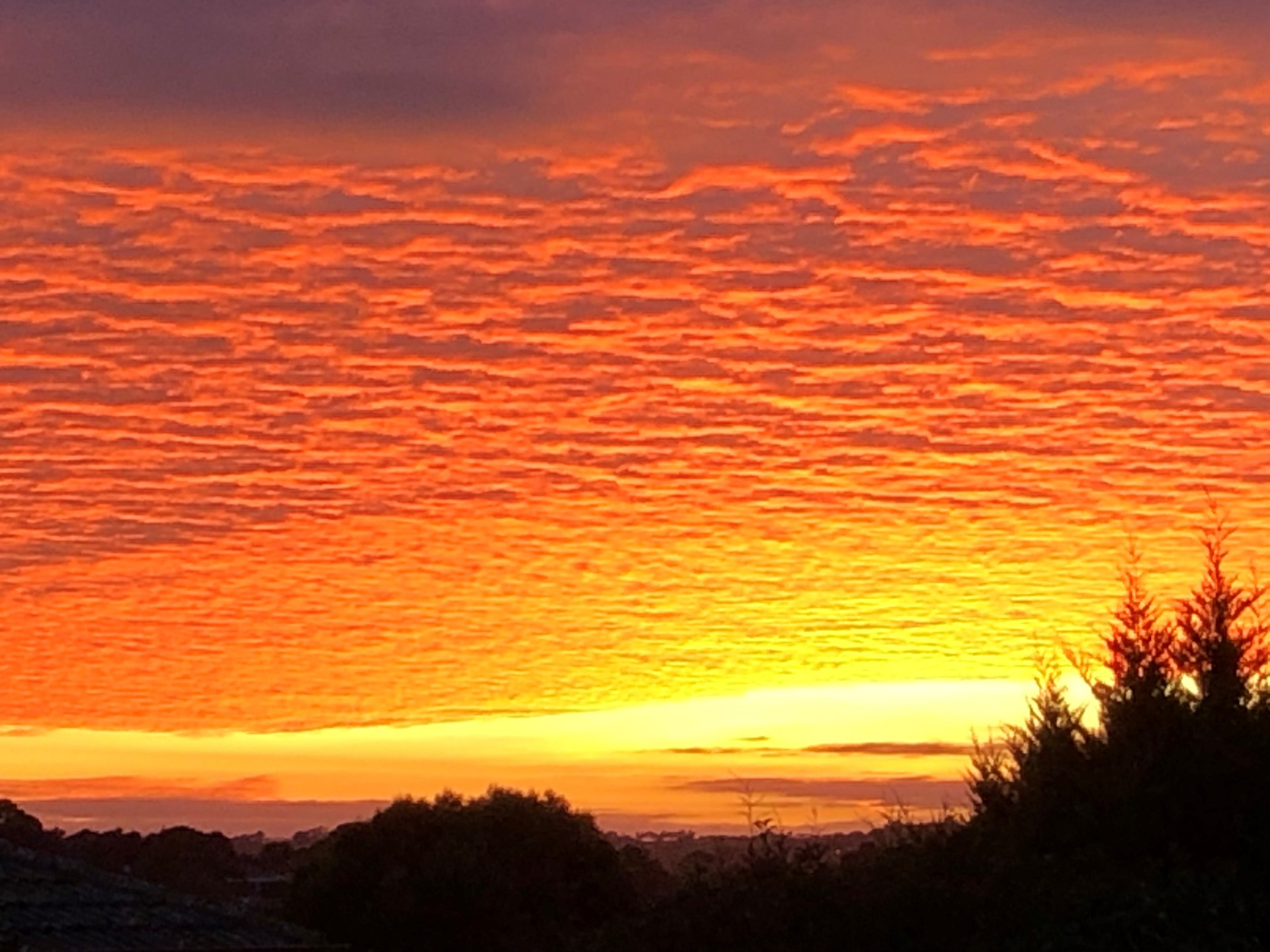 A dazzling sunrise just above the horizon sending radiant light across the dappled cloud-covered sky, the colours graduating from yellow to gold to vivid orangewith vivid orange. A silhouette of trees and shrubs are in the foreground.