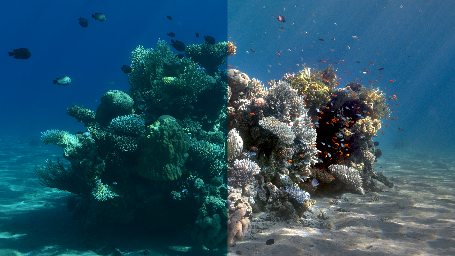 This Researcher created an algorithm that removes the water from Underwater Images