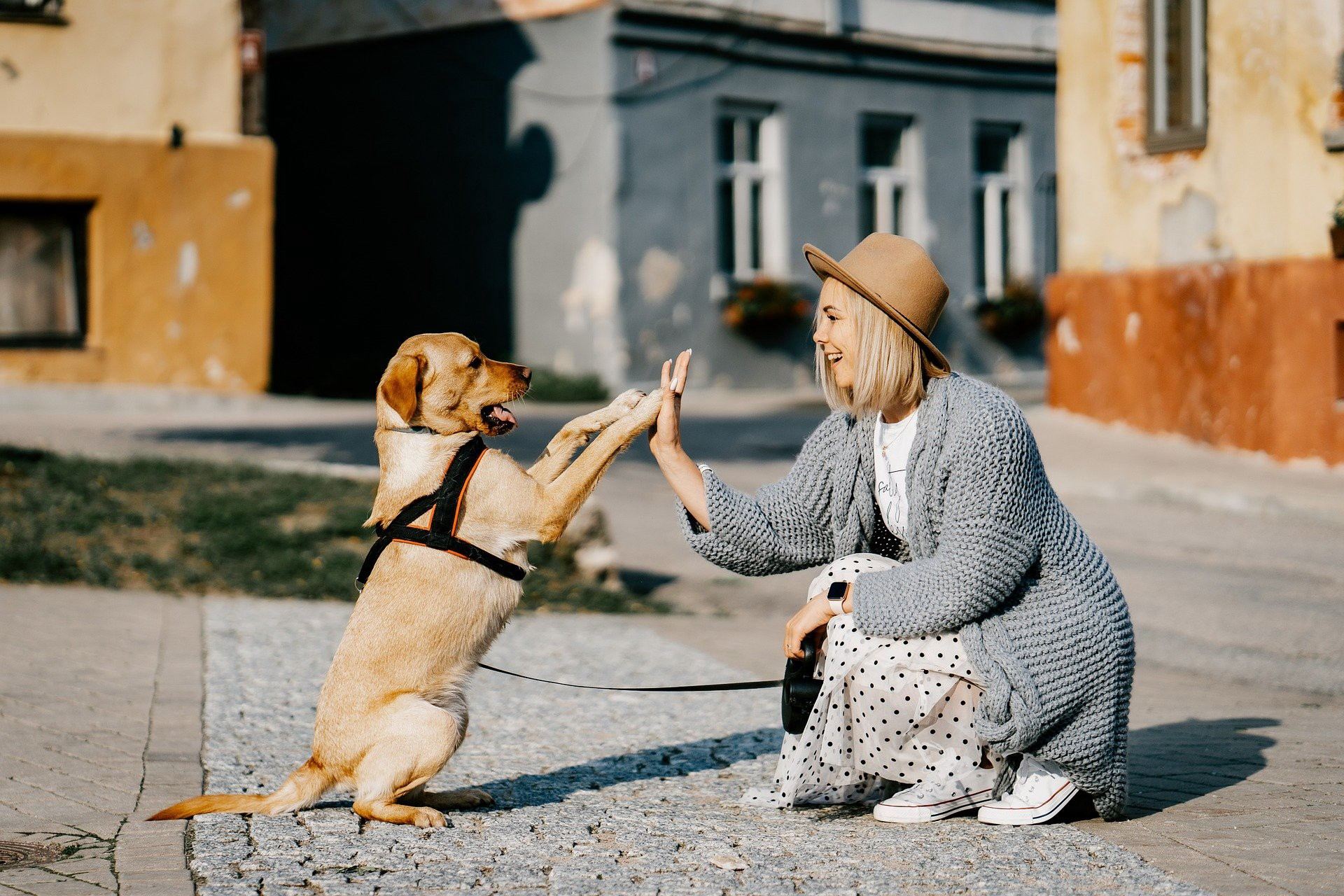 A girl wearing a brown hat shakes hands with a dog somewhere in Europe.