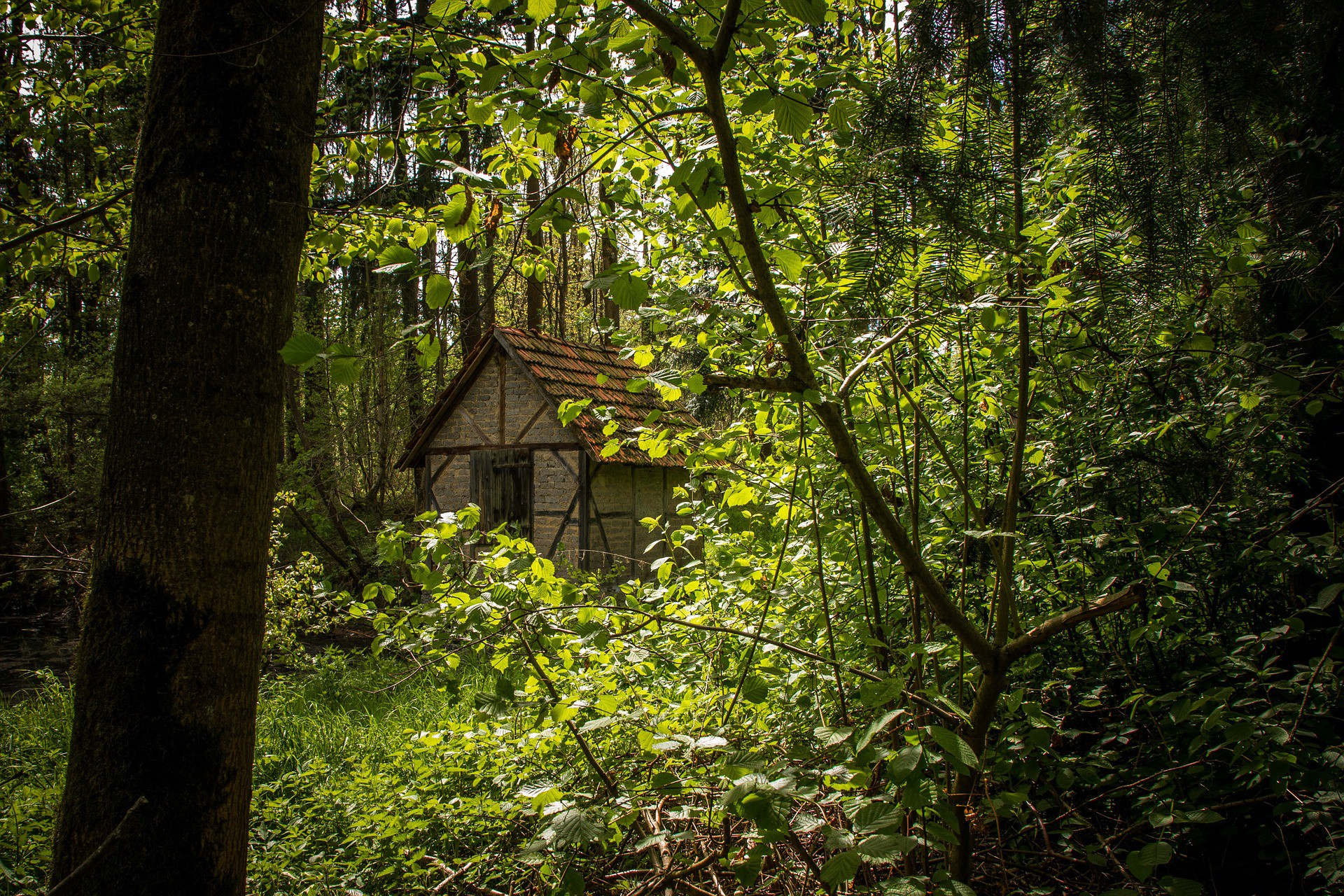 Cabin in the woods surrounded by green foliage