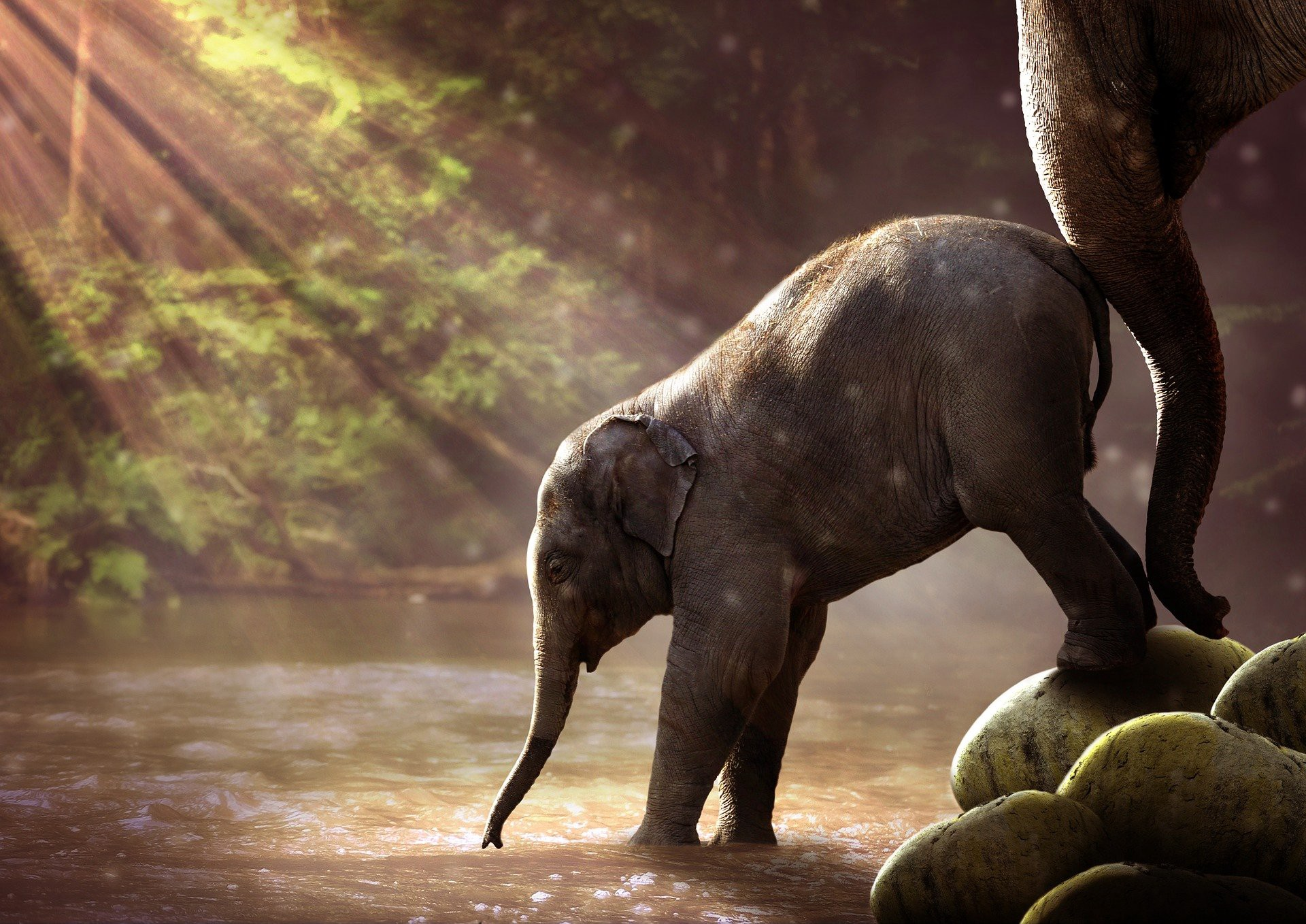 An adult elephant nudges a baby elephant towards a watering hole. Rays of light are shining through the trees.