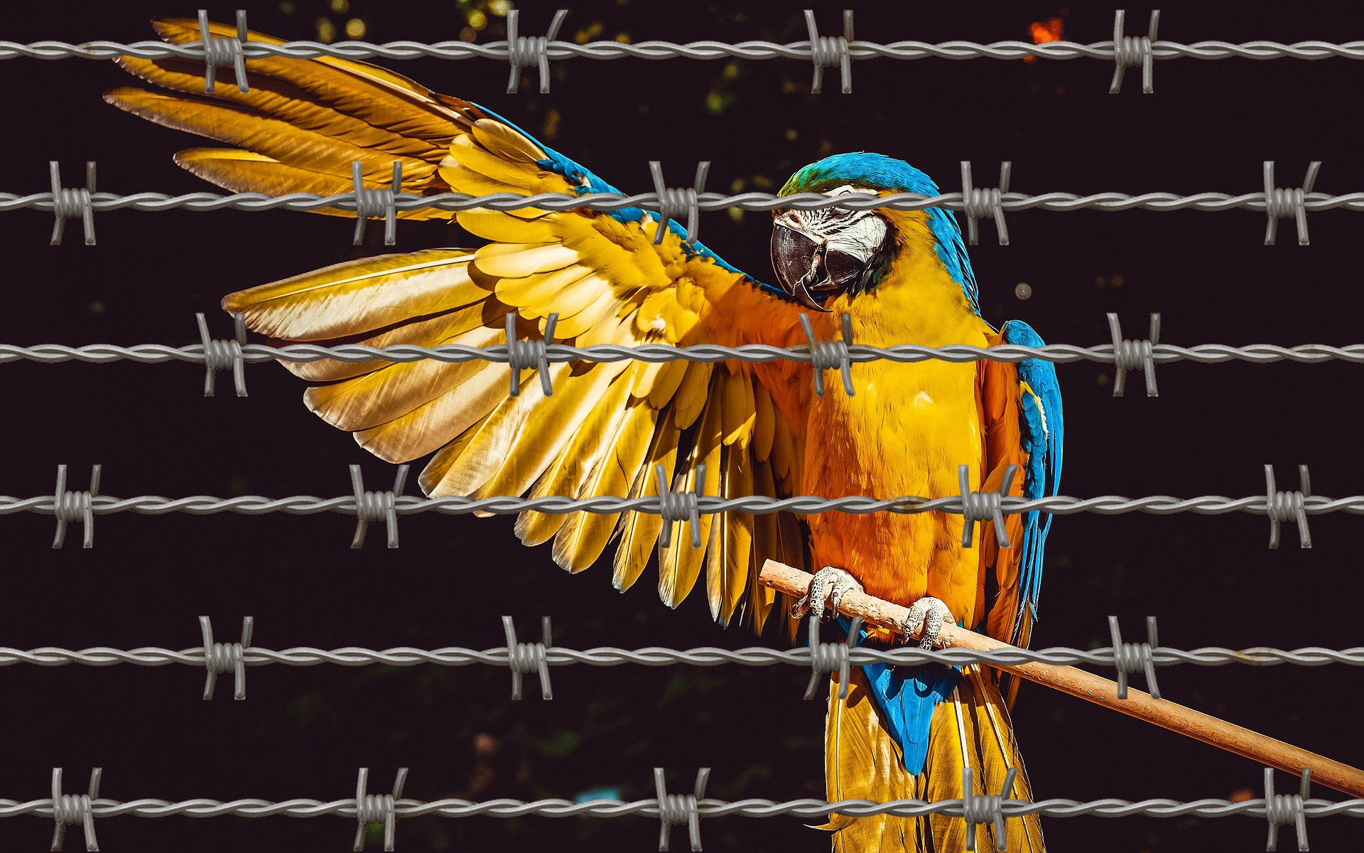 A Bird in Prison, caged. Metaphor: people do find redemption, peace and inner beauty. Society is well served trusting that.