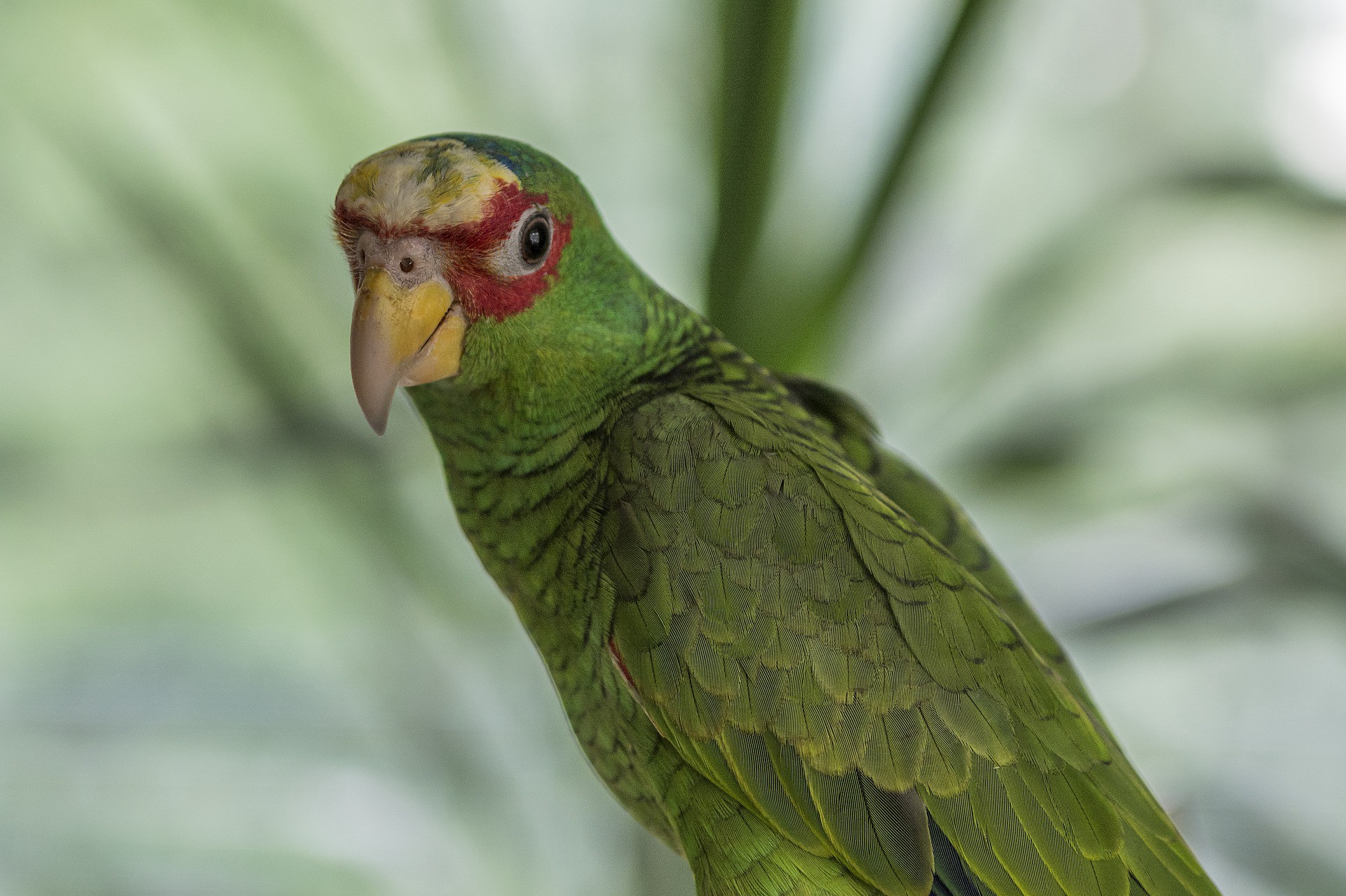 Picture of exotic bird