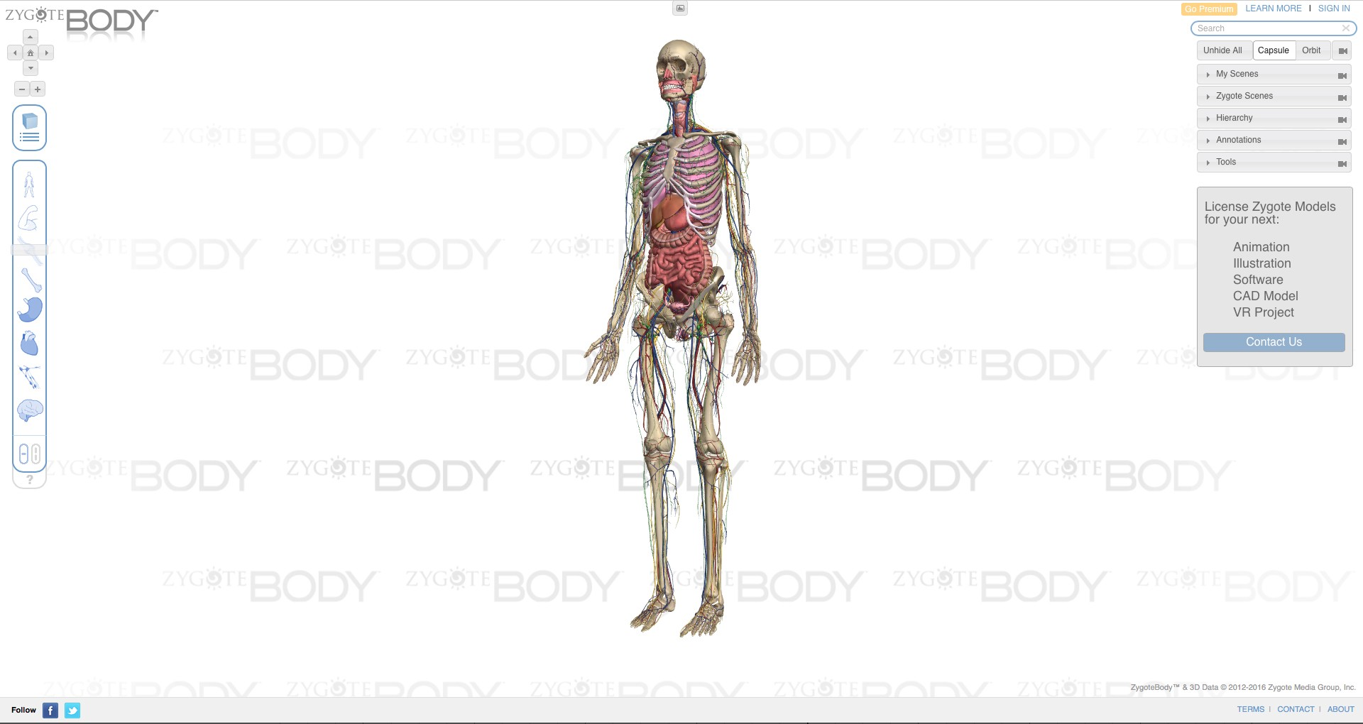 A 3D view of human body from https://zygotebody.com