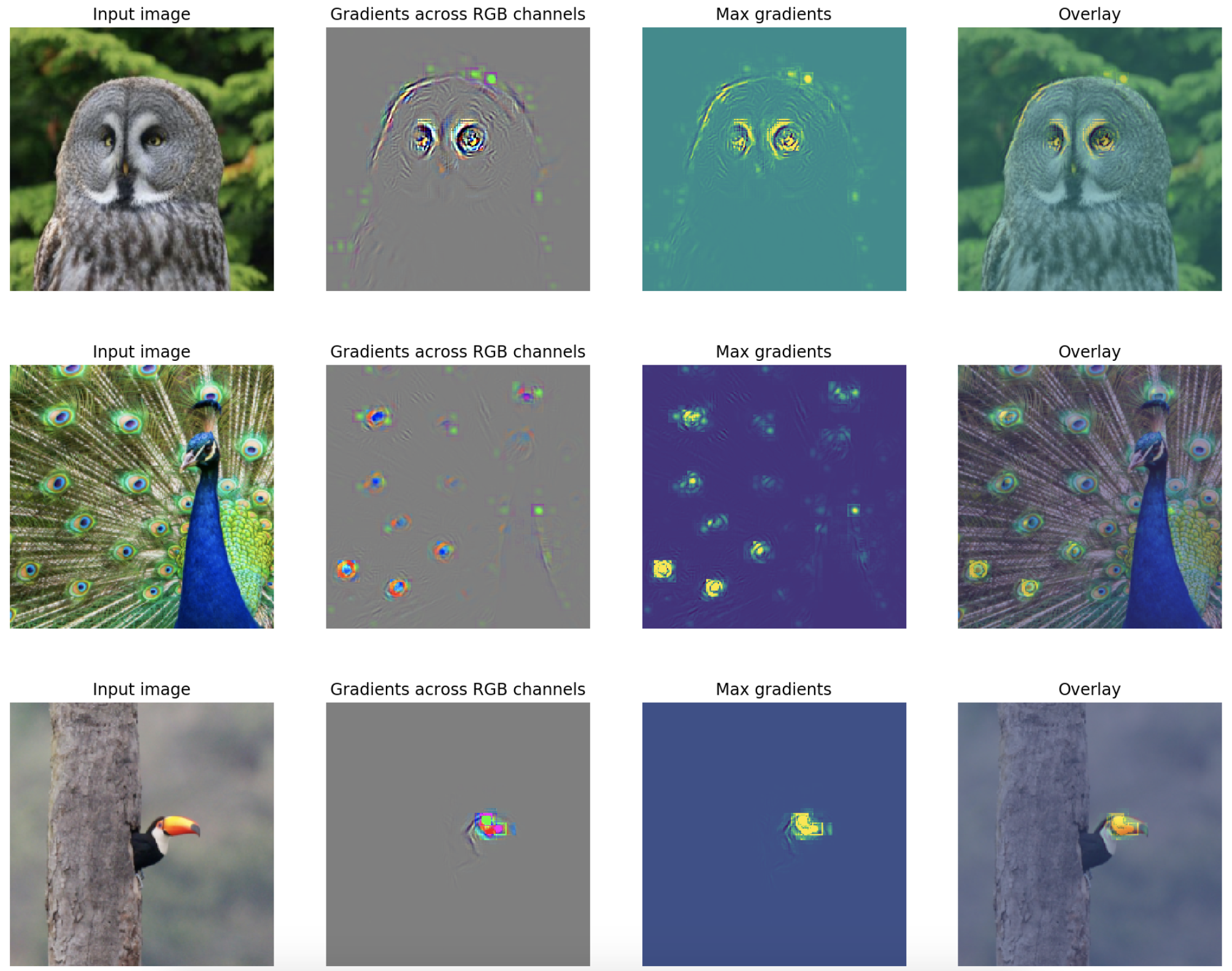 """Uncovering what neural nets """"see"""" with FlashTorch"""