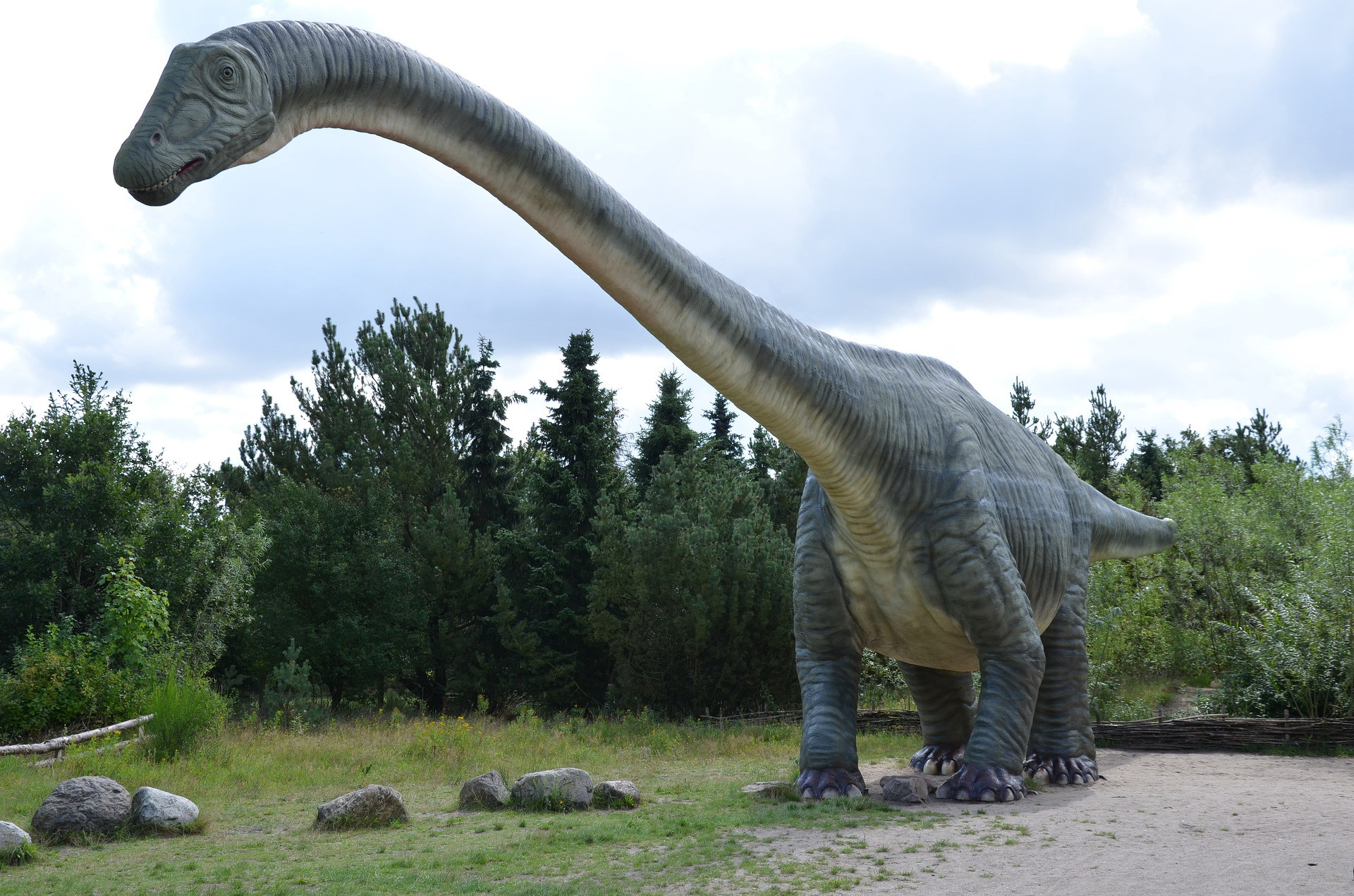 Photo by Frank P. via Pixabay — A picture of the long-necked Brachiosaurus