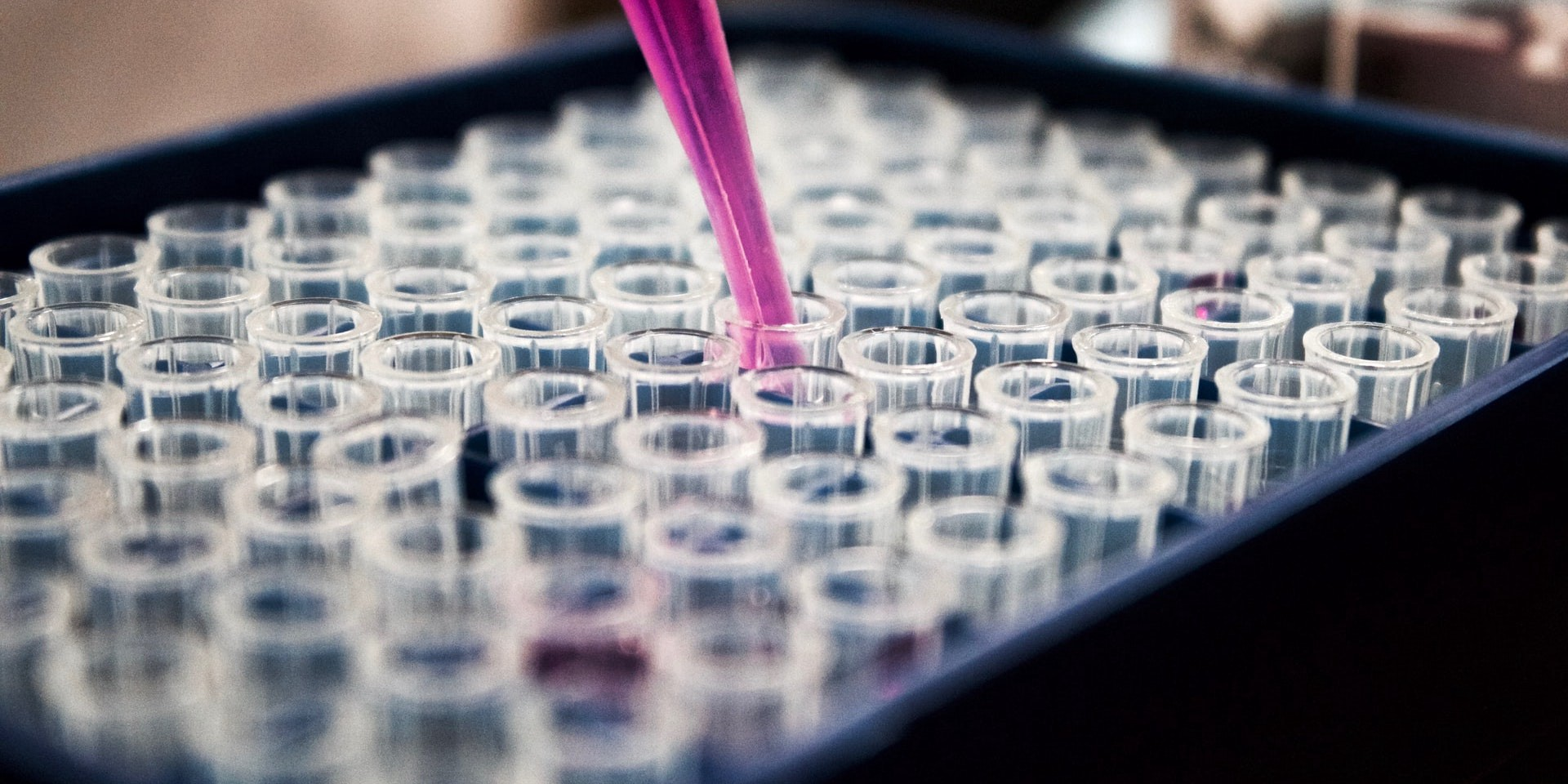A pipette containing pink liquid fills multiple test tubes ahead of testing