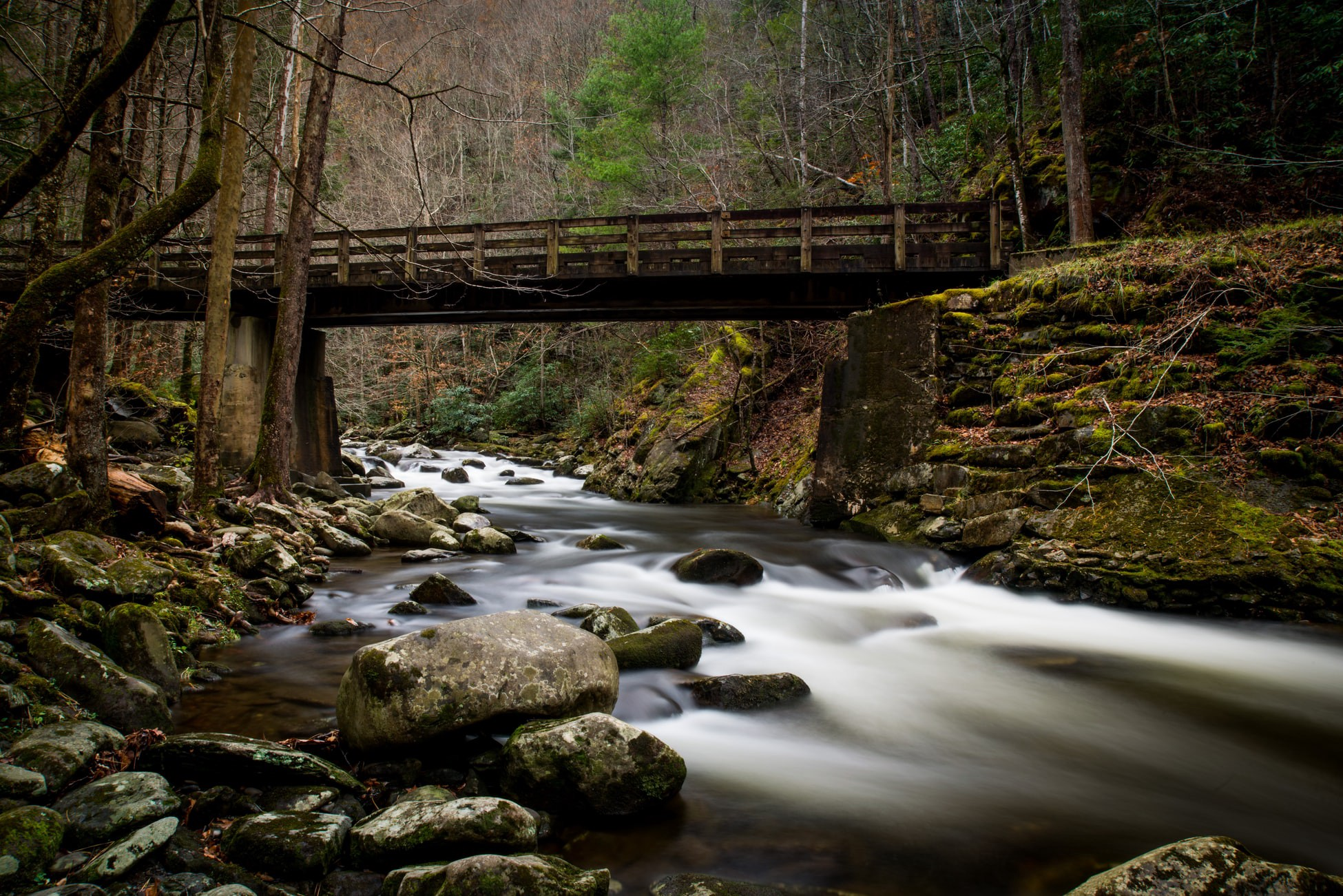 A stream flowing under a bridge in the woods