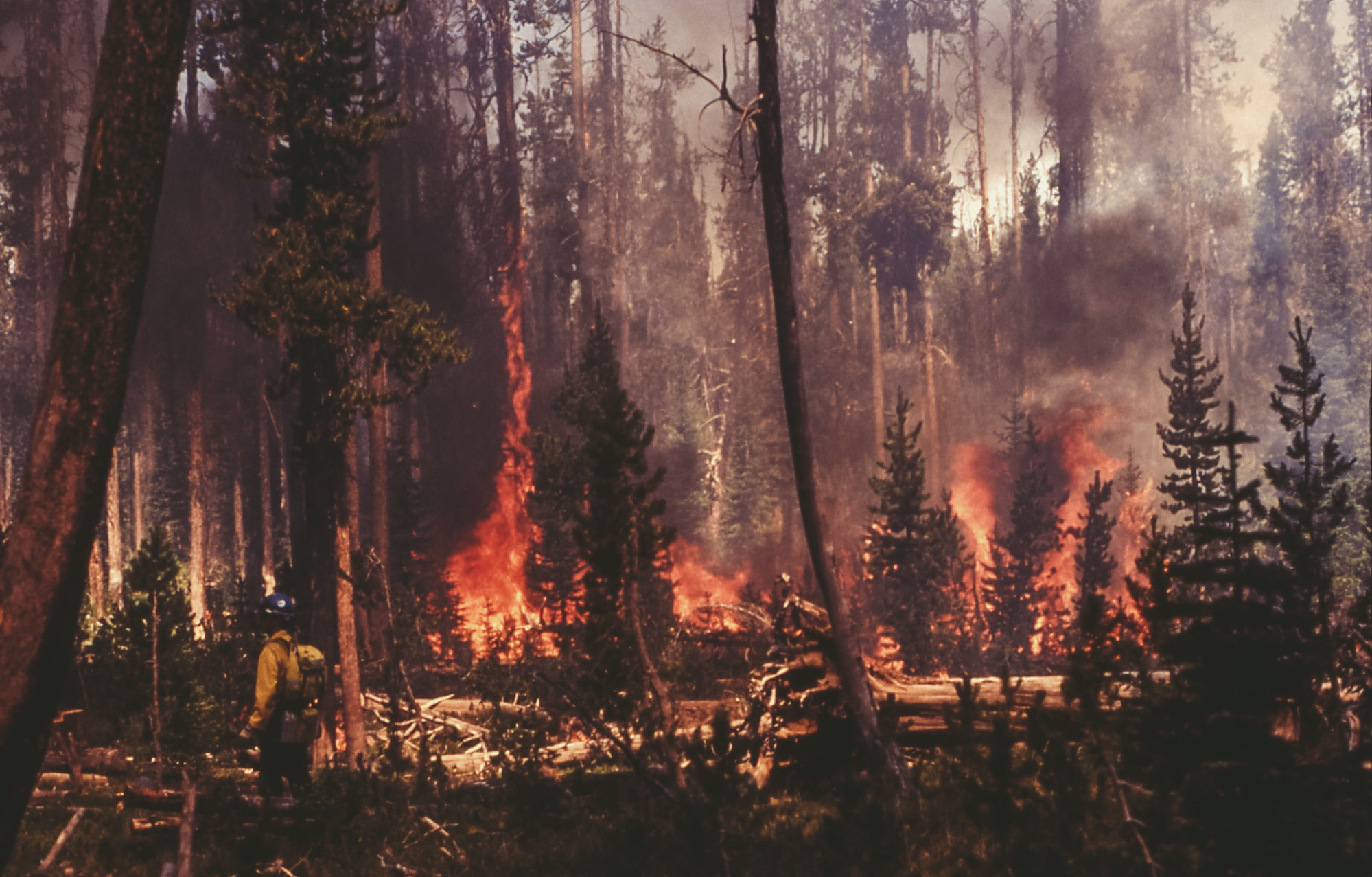 The Spark That Starts The Wildfire: Seeking Forrest Fenn's
