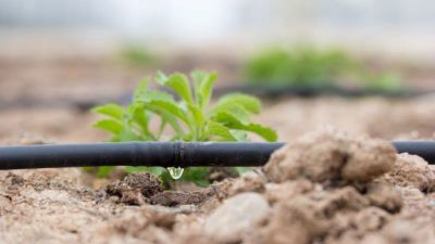 Drip Irrigation Systems Market | Market Data Forecast 2024