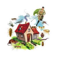 How to Safeguard Pets During Pest Control Treatment