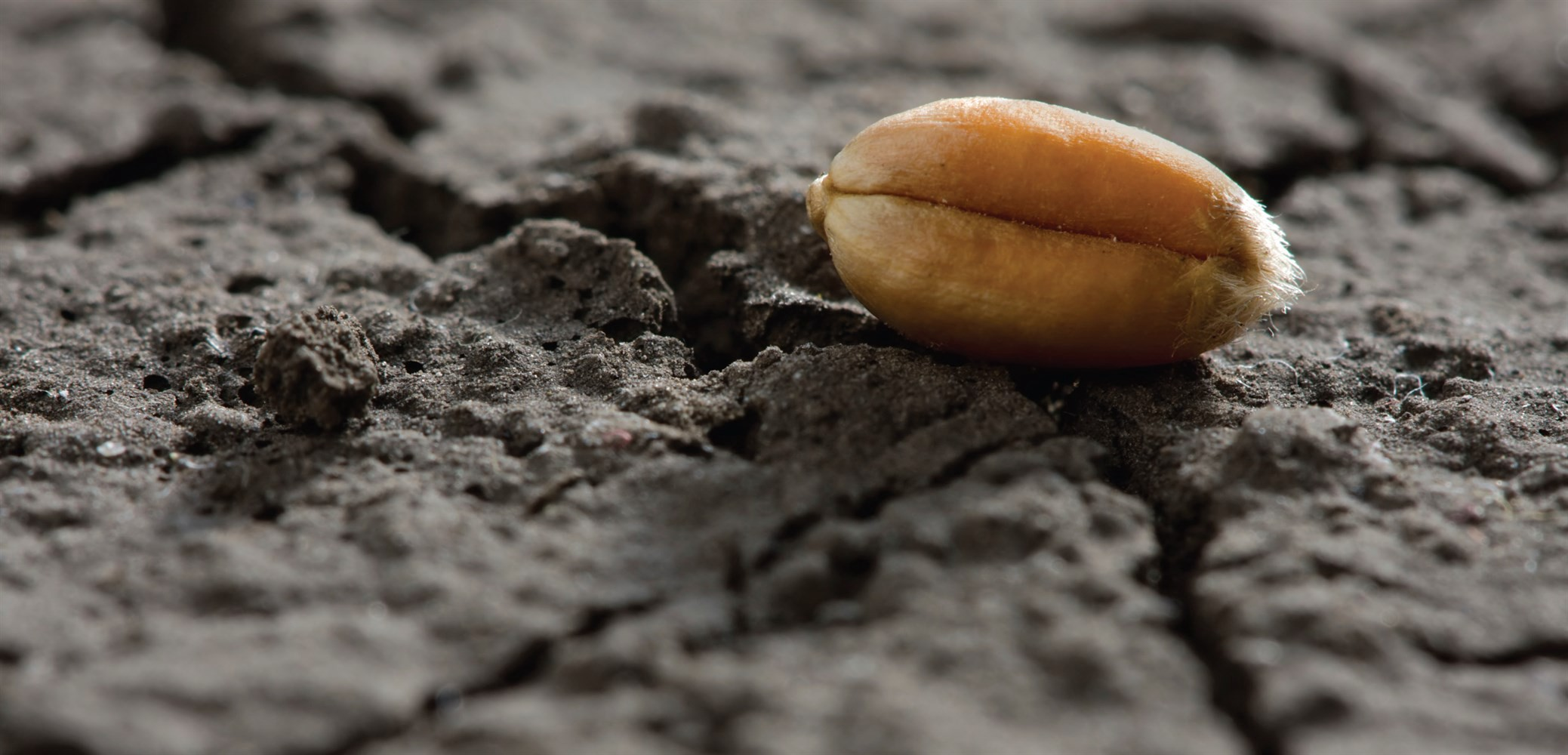 Cancer — The Seed and Soil - Dr  Jason Fung - Medium