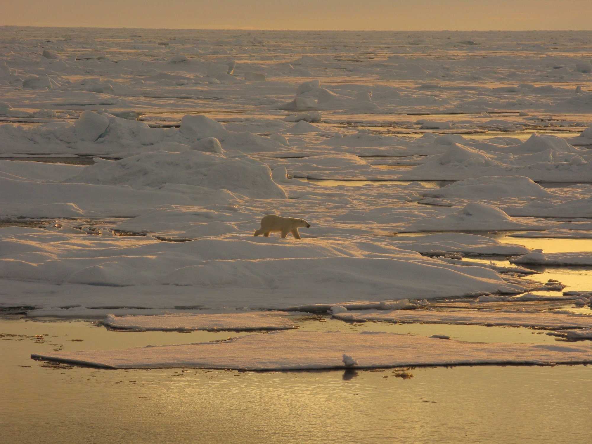 Landscape view of a polar bear surrounded by broken sea ice and open water.